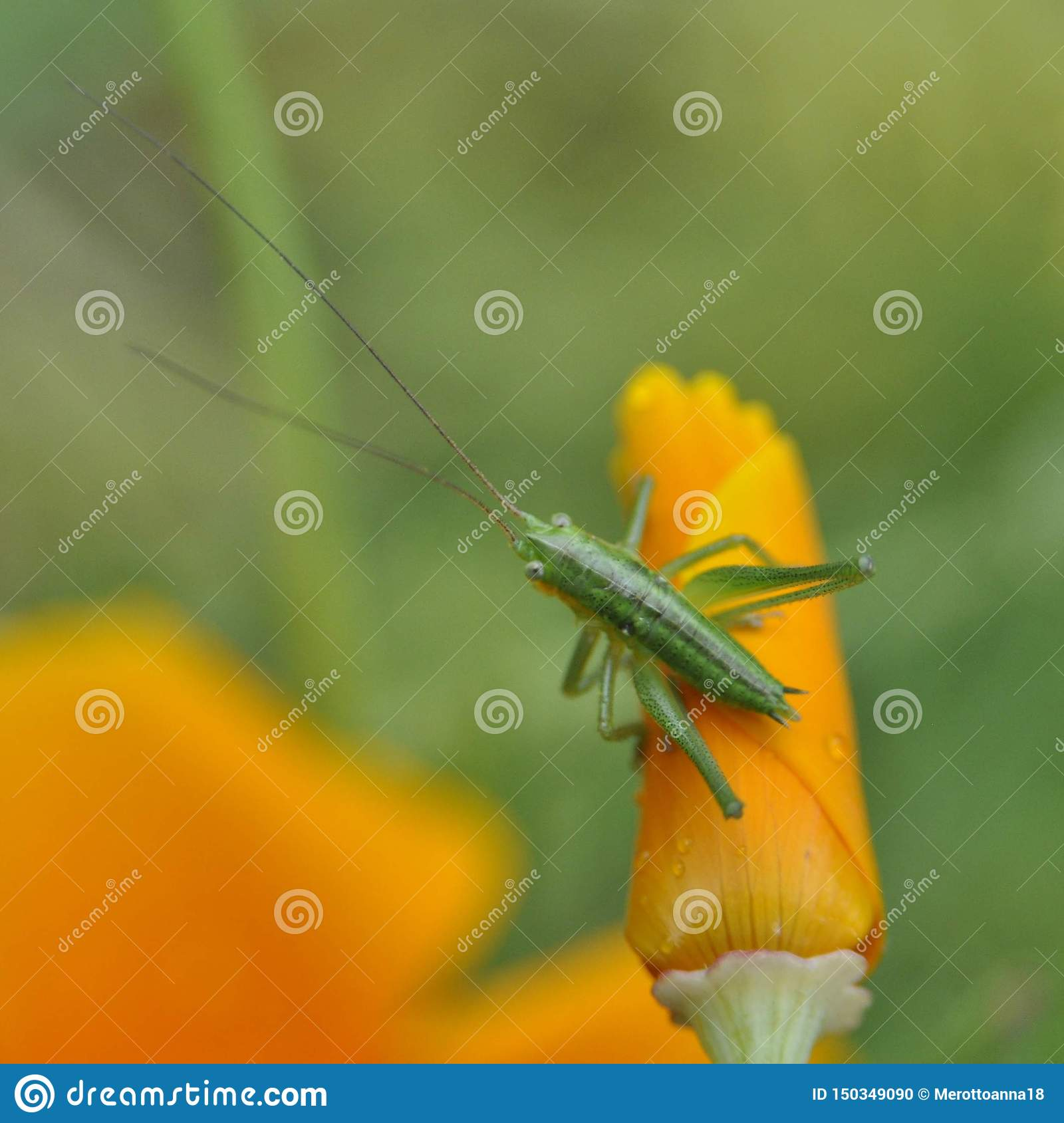 Flower and a insect