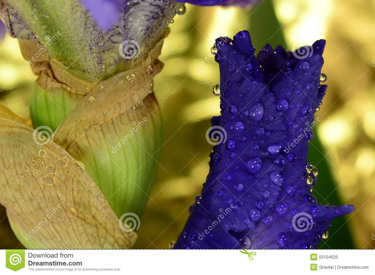 The flower iris stock image image of detail background 55104625 the flower iris detail background izmirmasajfo Choice Image