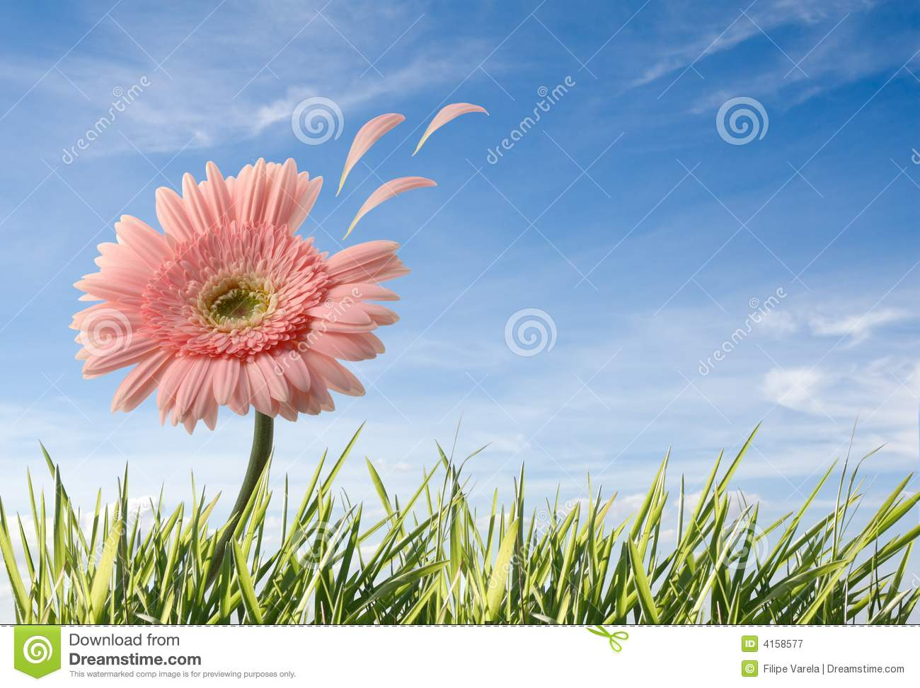 Flower with leafs flying