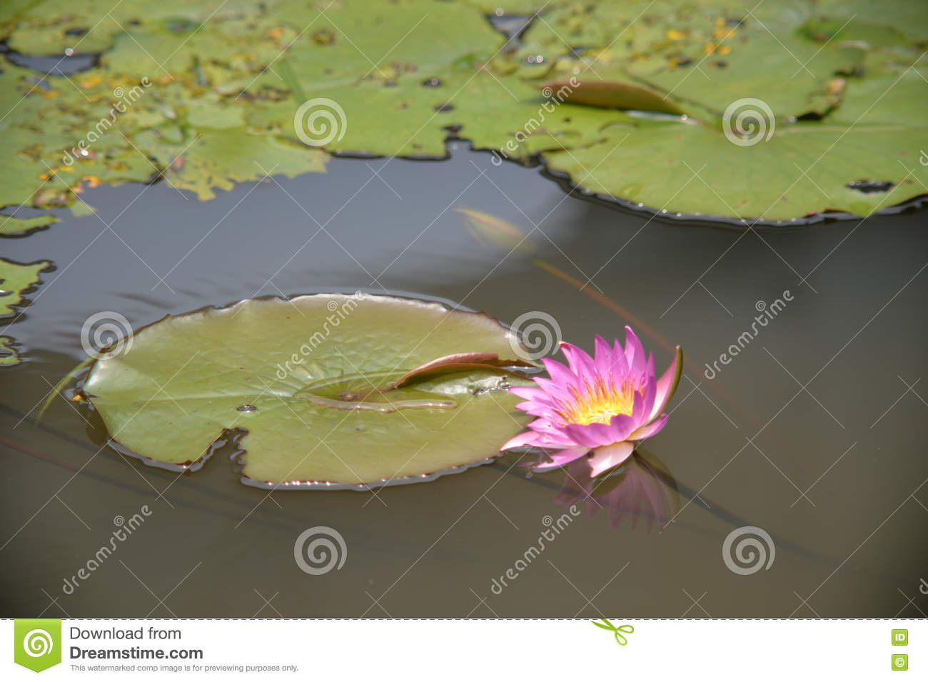 Flower like a crab stock image image of dragonfly blossomed 76273815 flower like a crab izmirmasajfo