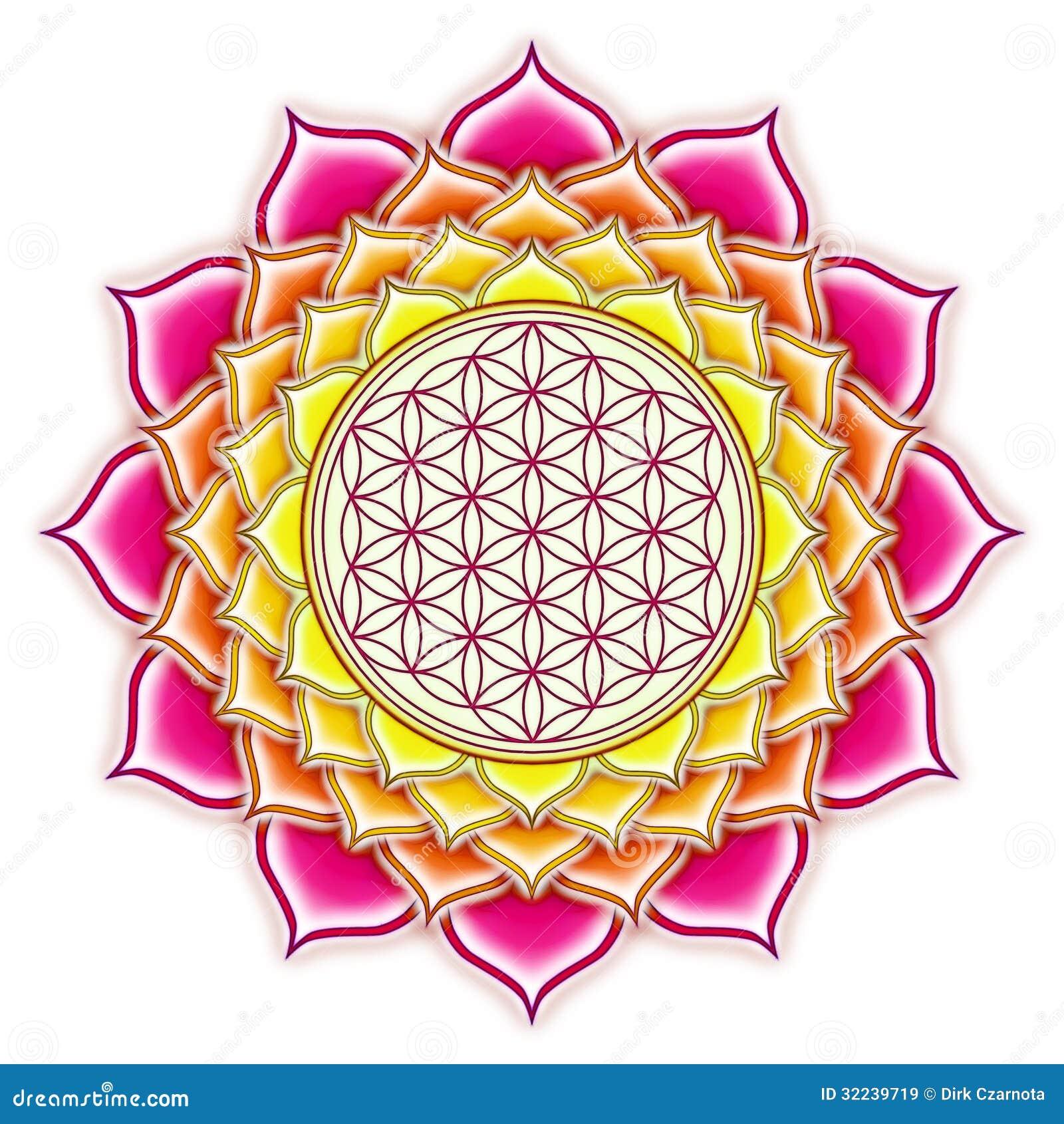 Flower Of Live Lotus Stock Illustration Image Of