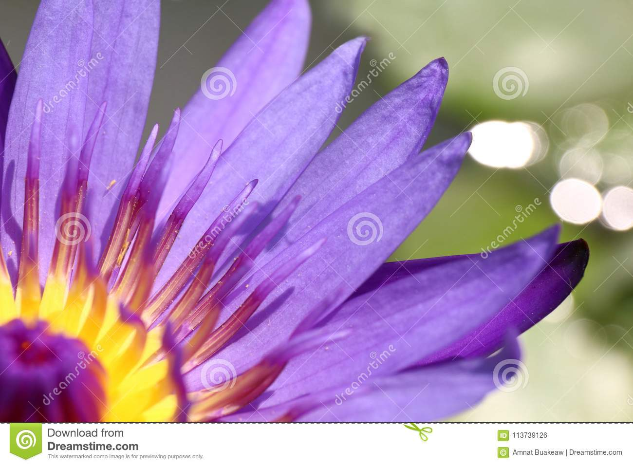 Lotus Beautiful Purple Lotus Carpel Close Up Flower Lotus Flower