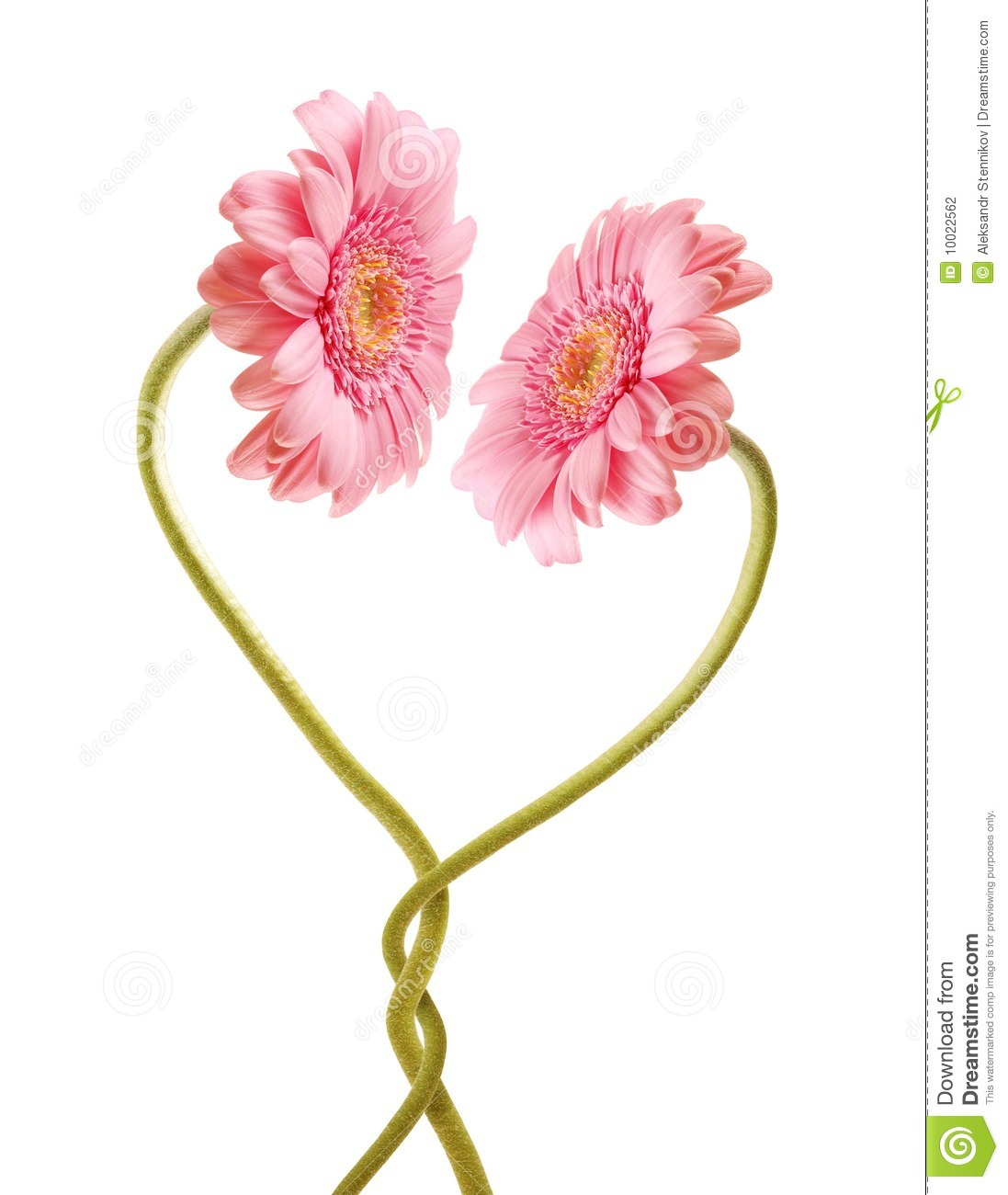 Flower Love Stock Photography - Image: 10022562