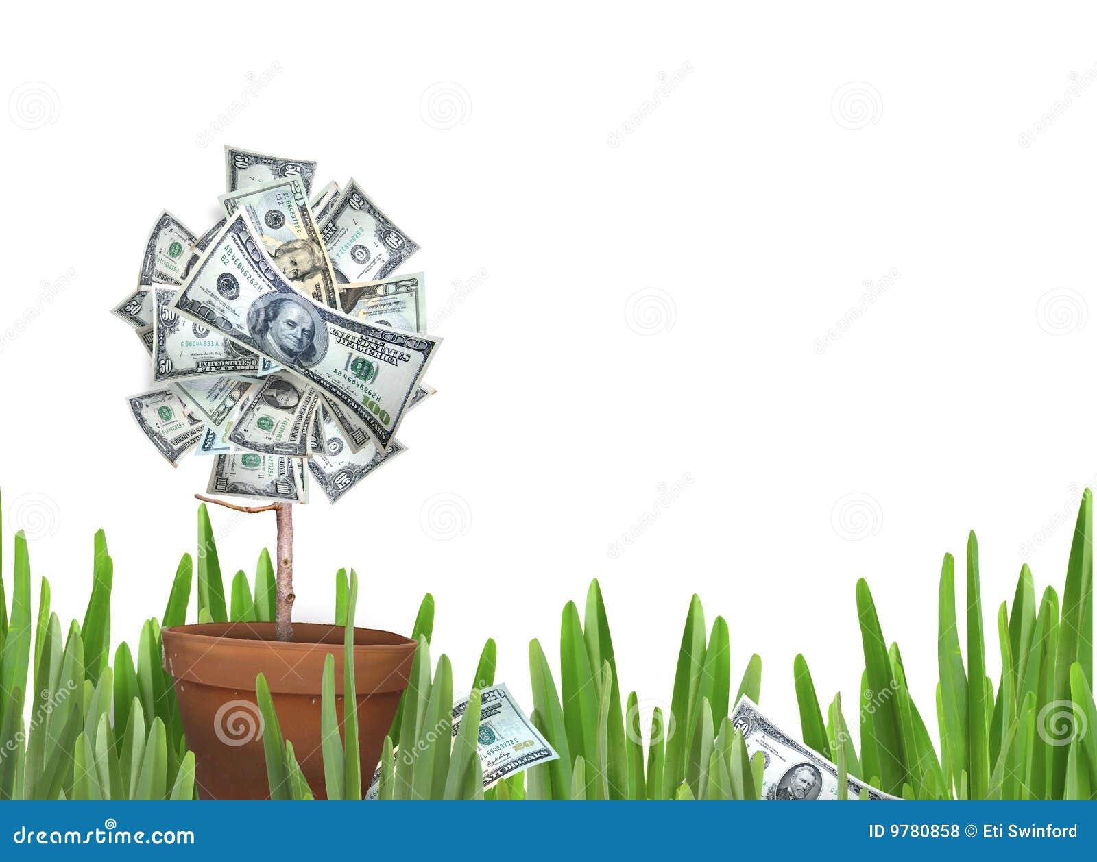 Flower money