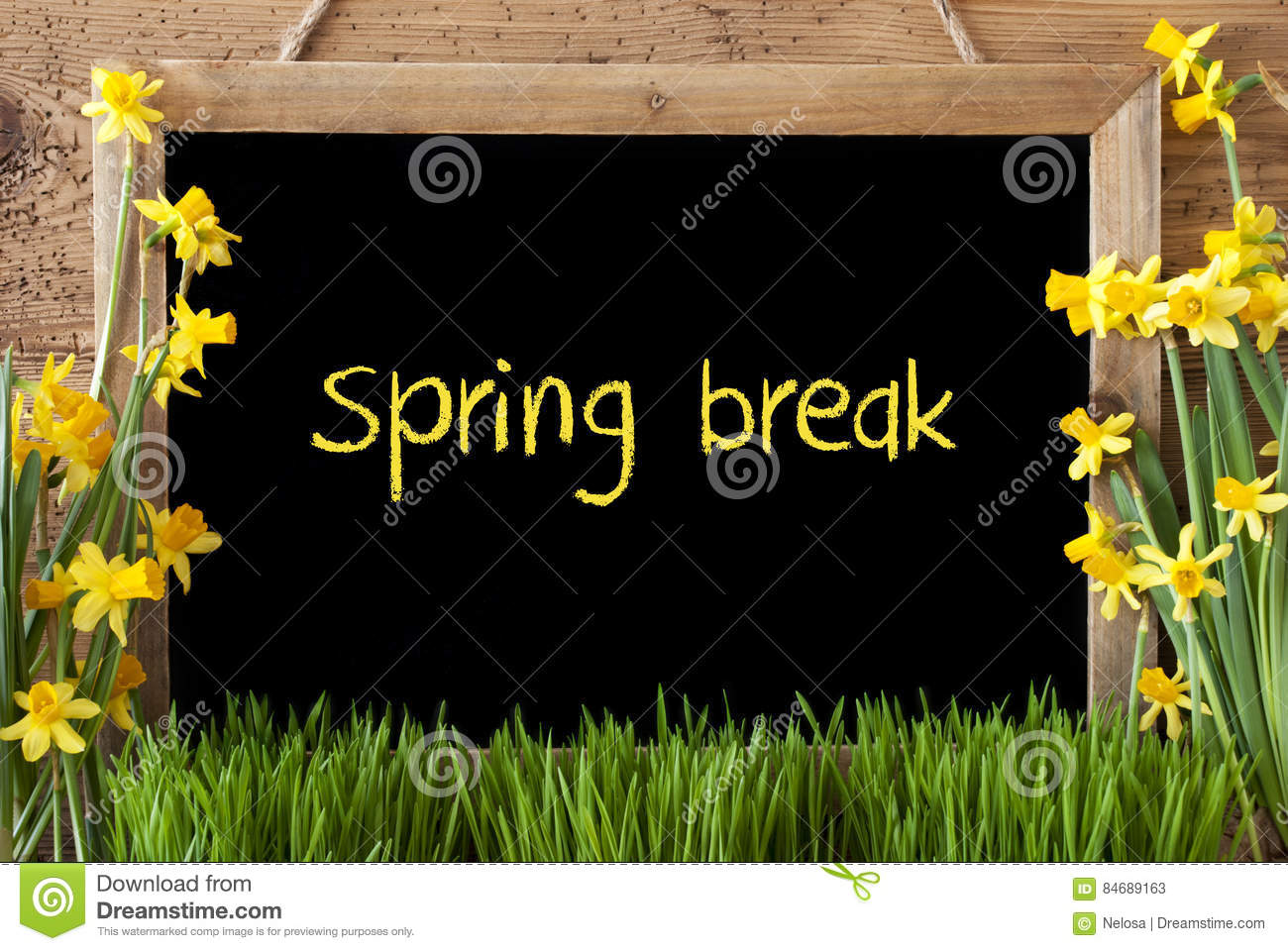 Flower Narcissus Chalkboard Text Spring Break Stock Image Image