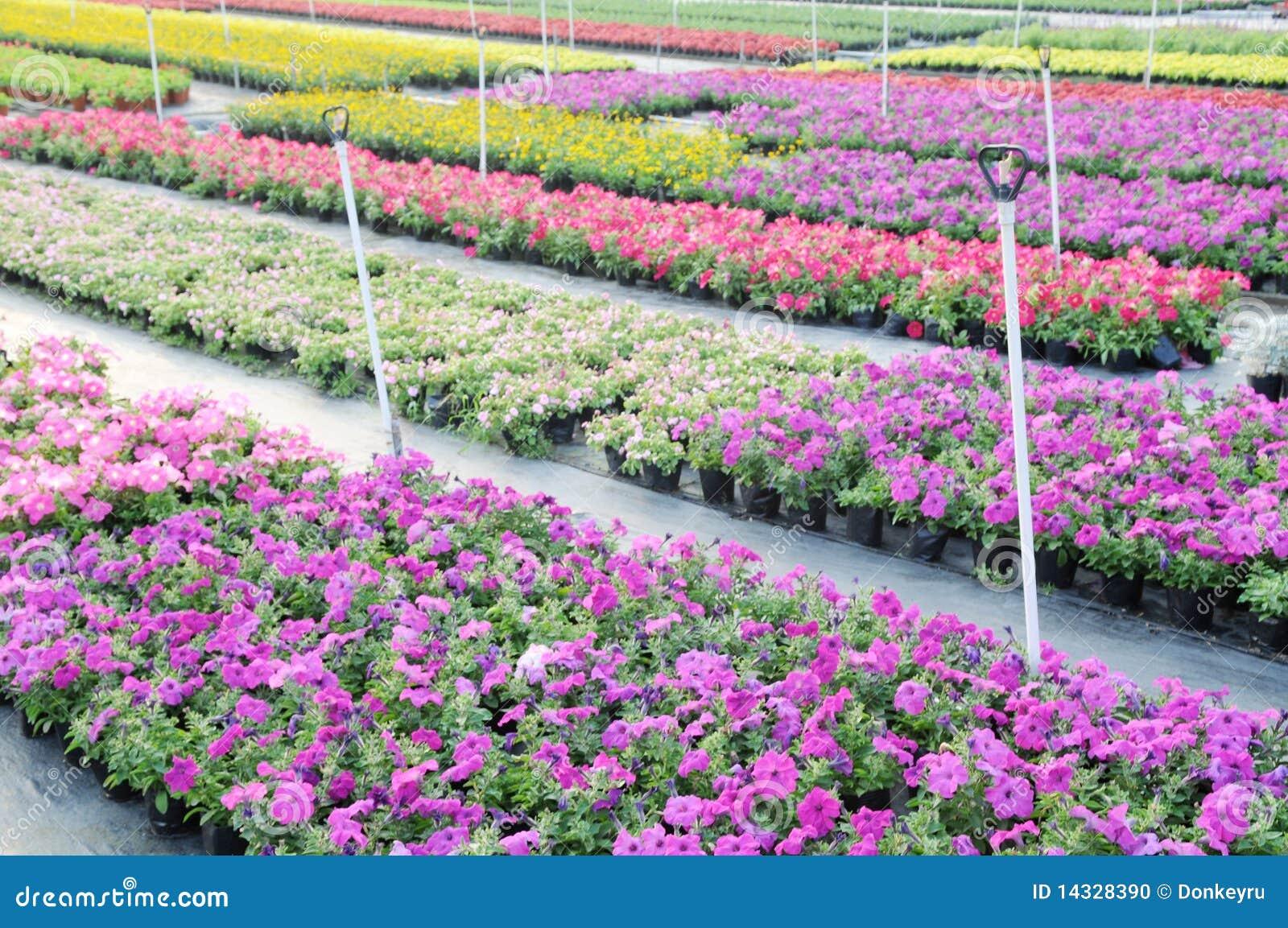 Flower Garden Nursery Stock Photo Image 72573883