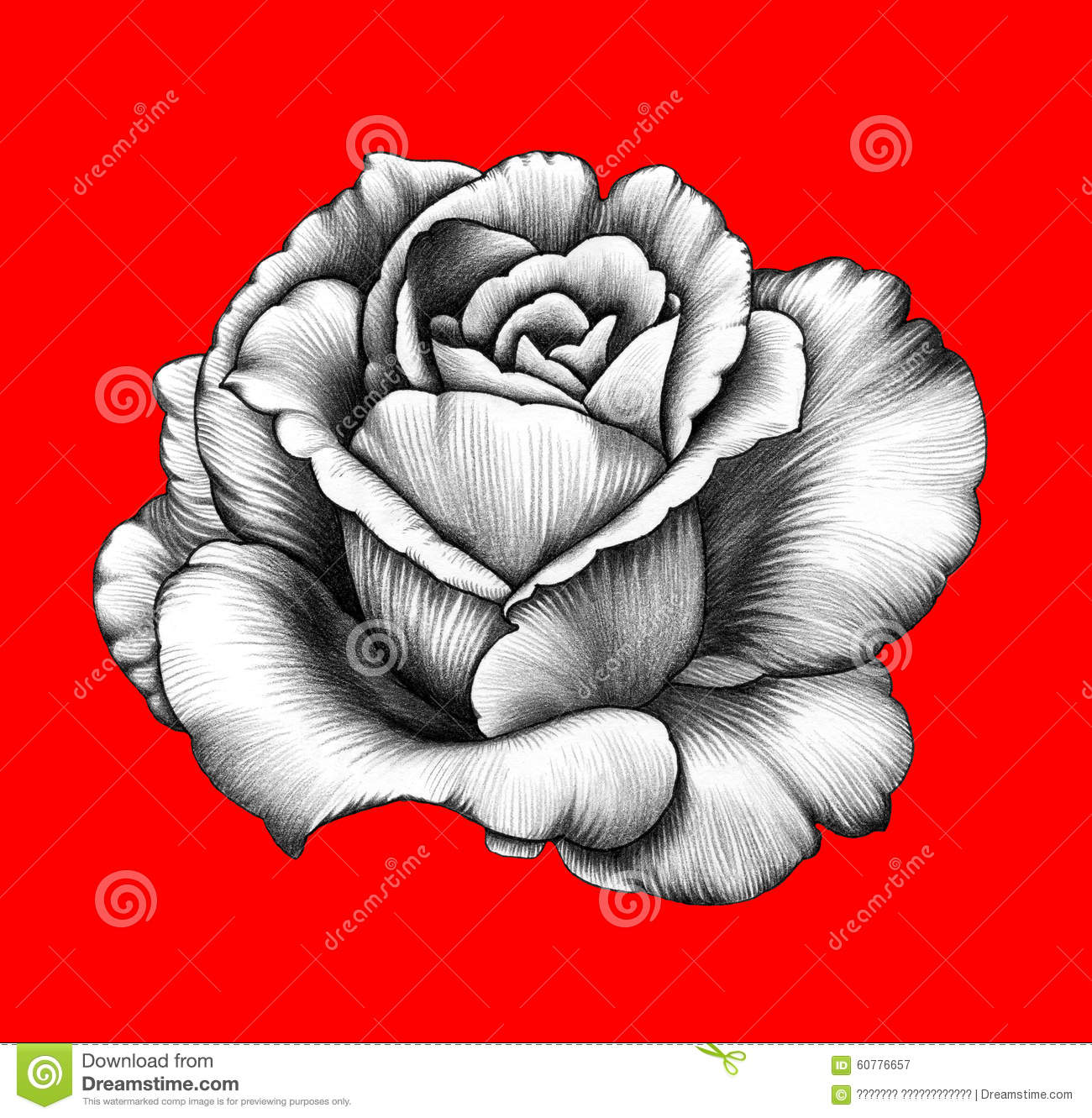 Flower Pencil Drawing Stock Illustration Illustration Of