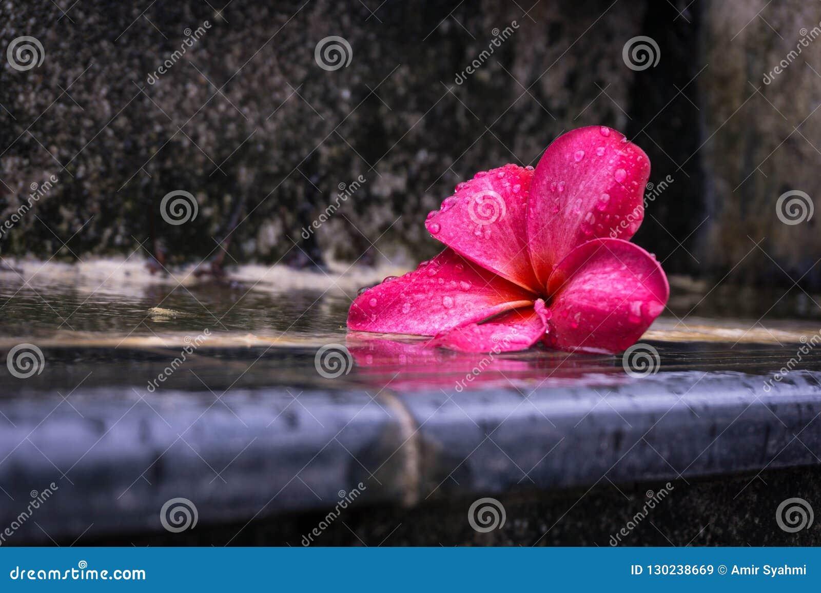 Flower Petals On A Wet Stair