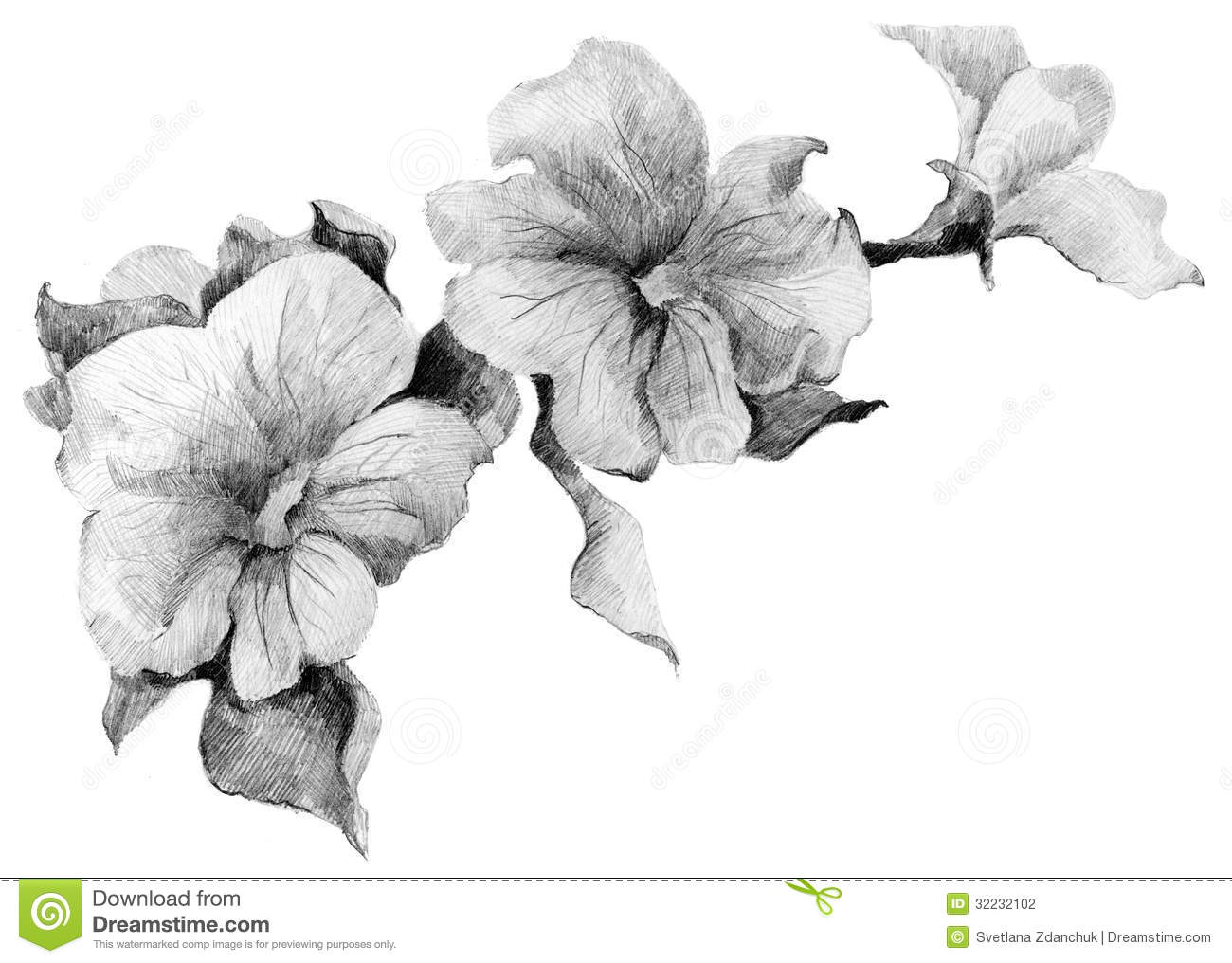 Flower Petunia Sketch Bouquet Stock Illustration ...