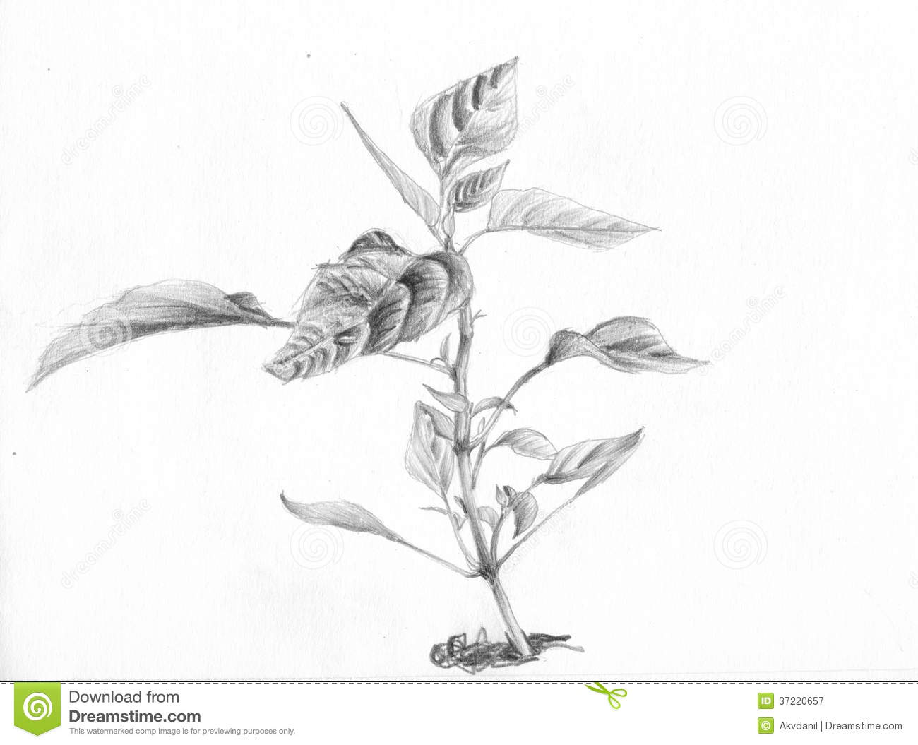 6498731 also Stock Illustration Contact Thin Icons Simple Clear Sharp Easy To Resize Image49218246 in addition Royalty Free Stock Images Black Traces Boots Image8994839 further Stock Photography Mouse Skeleton 3d Image23706682 furthermore Royalty Free Stock Photography Flower Plant Room Ground Pencil Sketch Image37220657. on travel plans