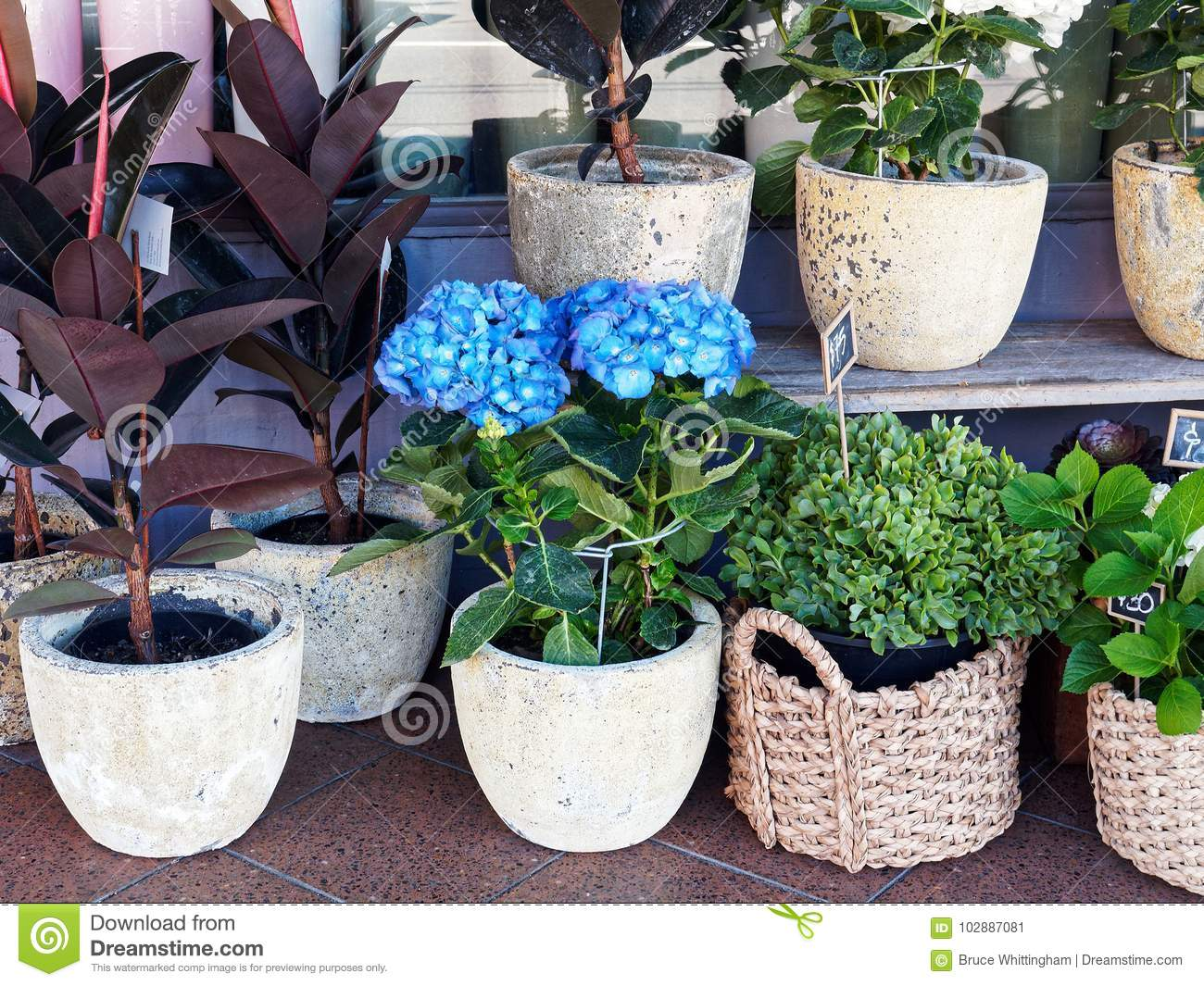 Flower Plants in Pots and Cane Baskets