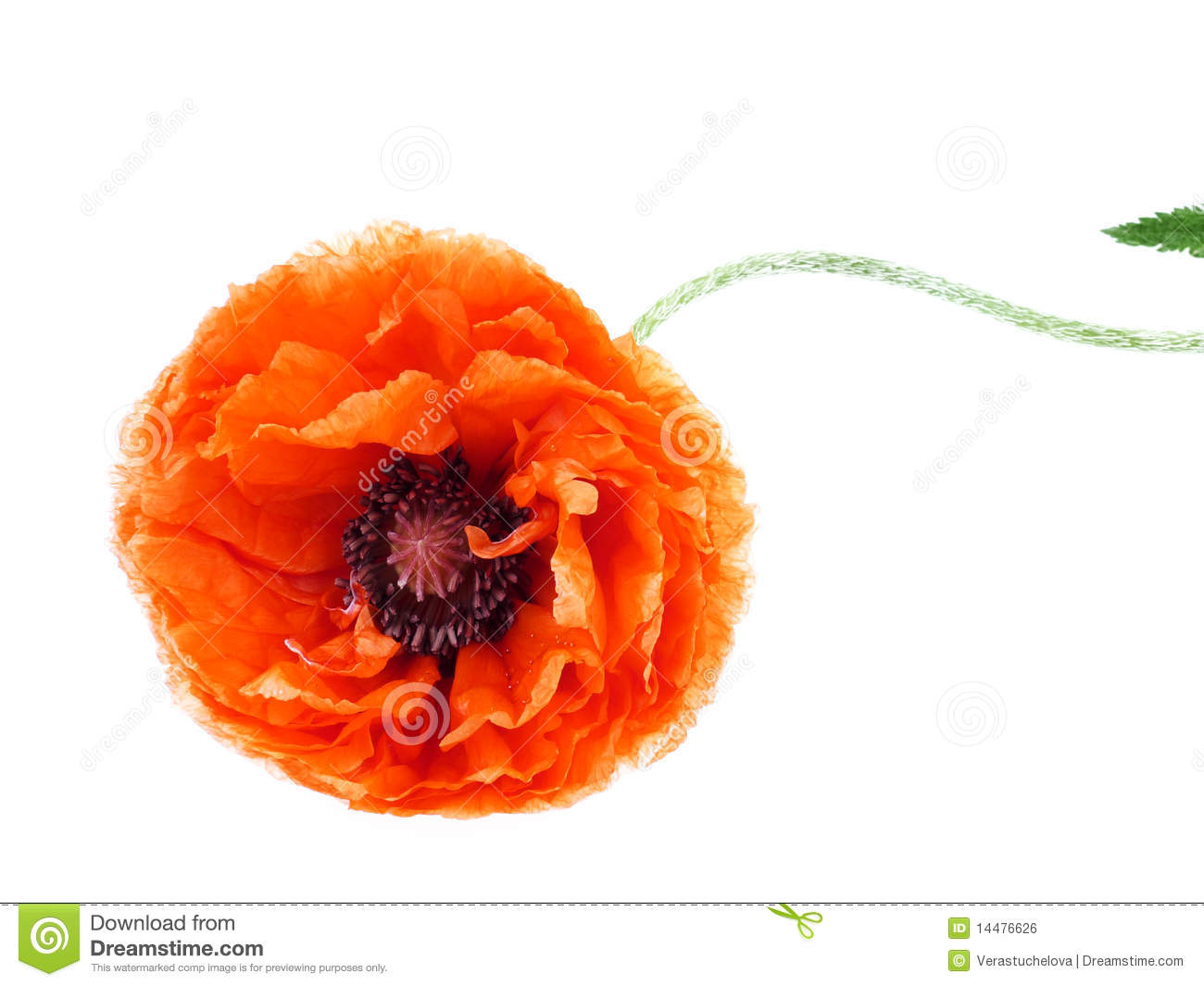 Poppy Flower Field At Night Royalty Free Stock Photography Image
