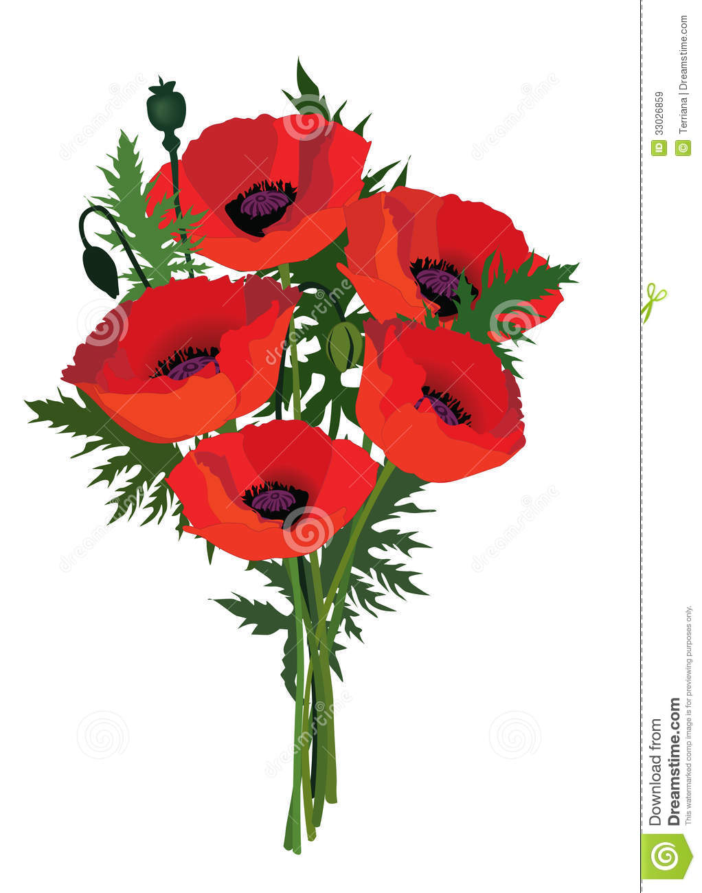 Flower Poppy Bouquet Stock Image Image Of Collection 33026859