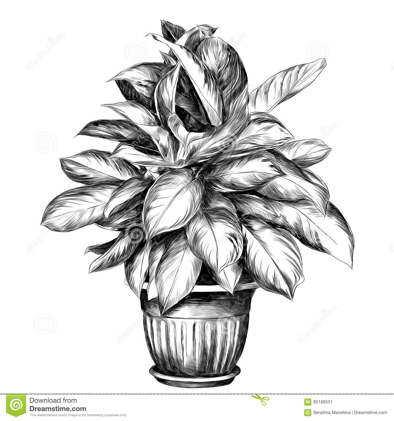 Flower pot aglaonema sketch vector