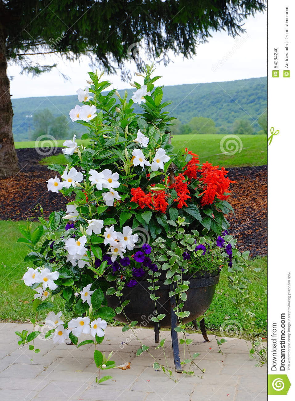 Charming Flower Pot On Patio Stock Photo