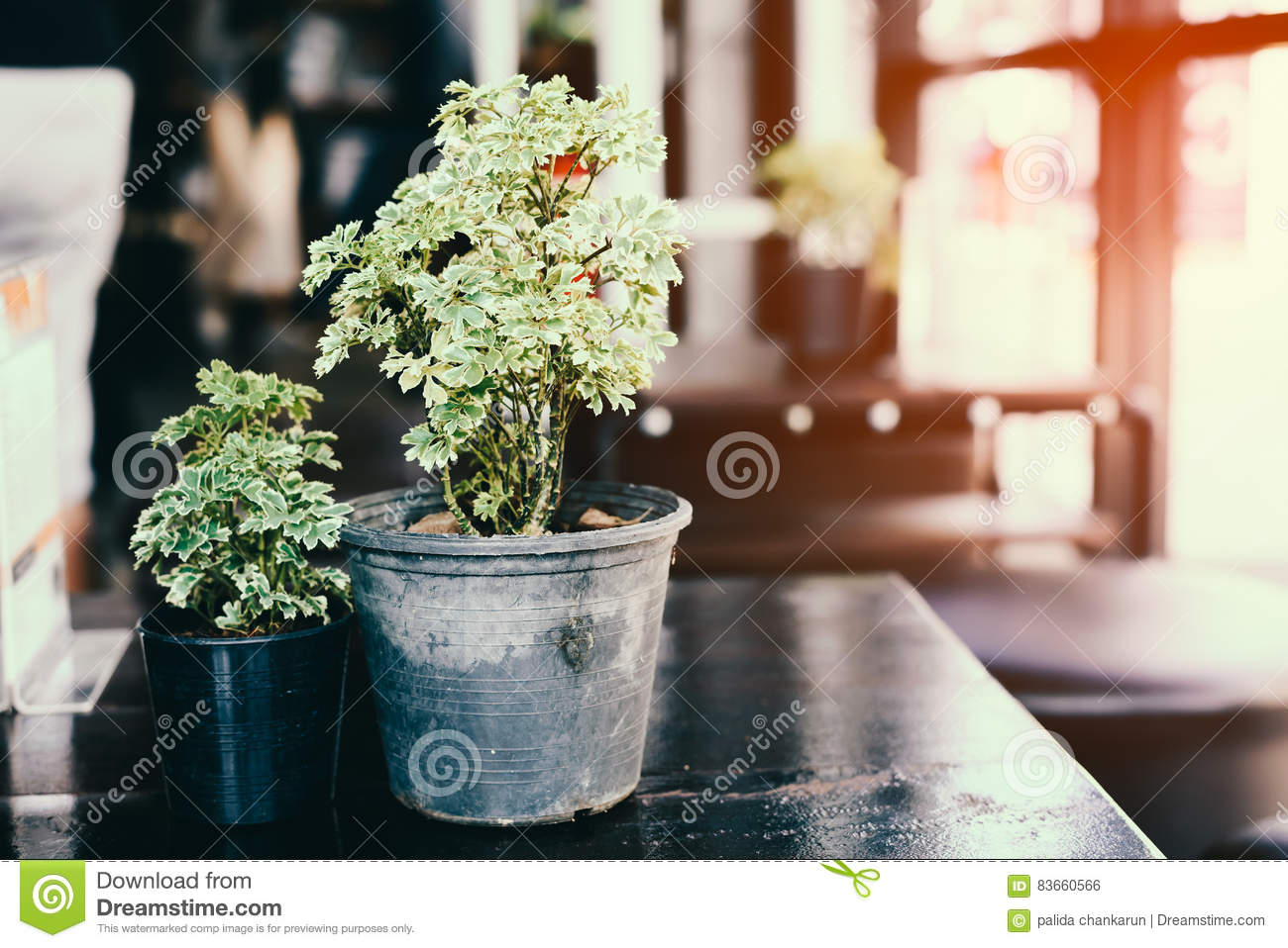 Flower pot on the table.