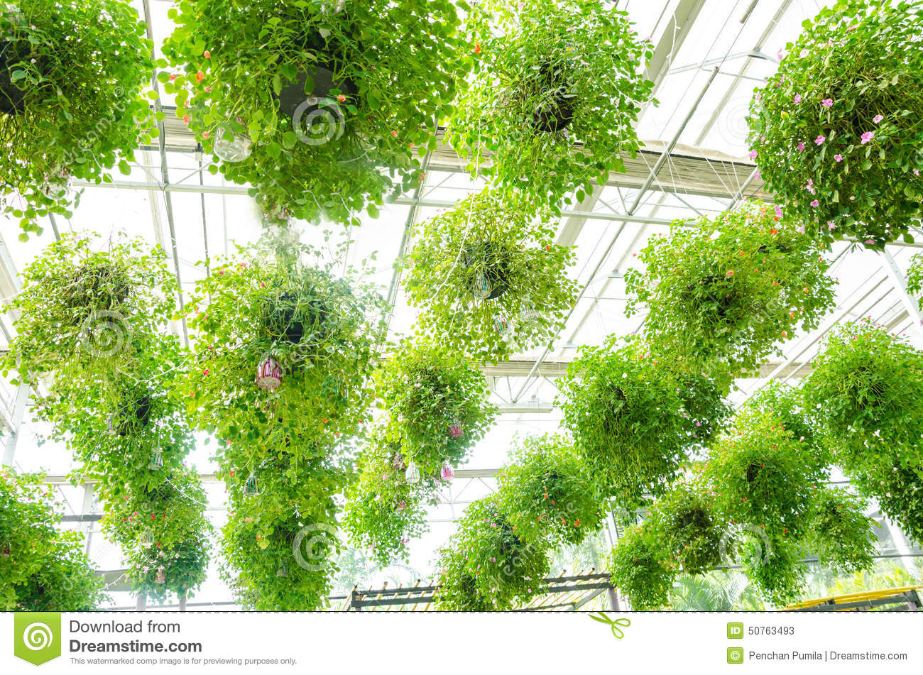 Flower In Pots Hanging On The Roof Stock Image - Image of vase ...