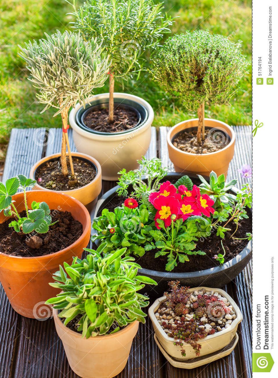 Flower Pots With Herbs And Flowers Stock Photo Image Of Beauty