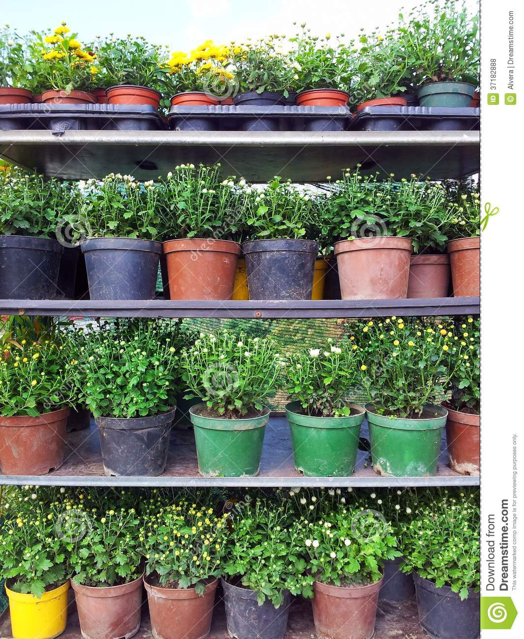 Flower Pots For Sale Royalty Free Stock Photos Image 37182888
