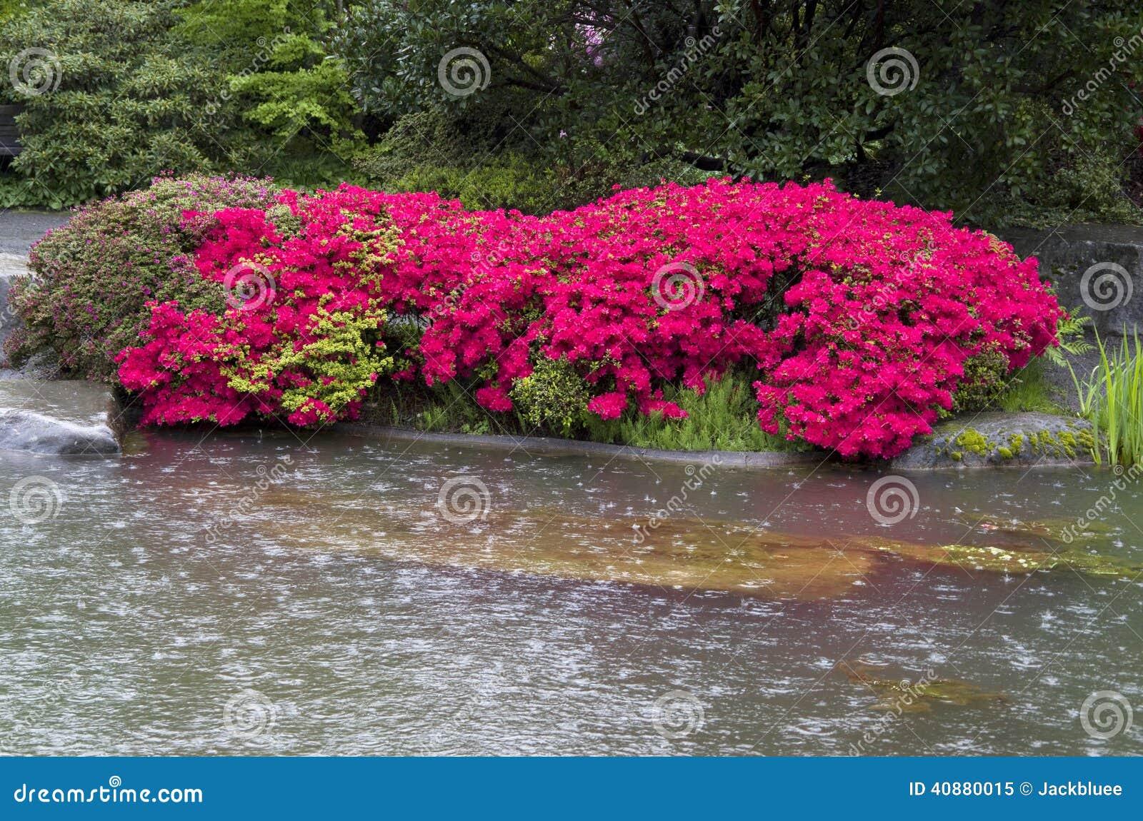 Flower rain pond garden stock photo image 40880015 for Garden pond design software free download