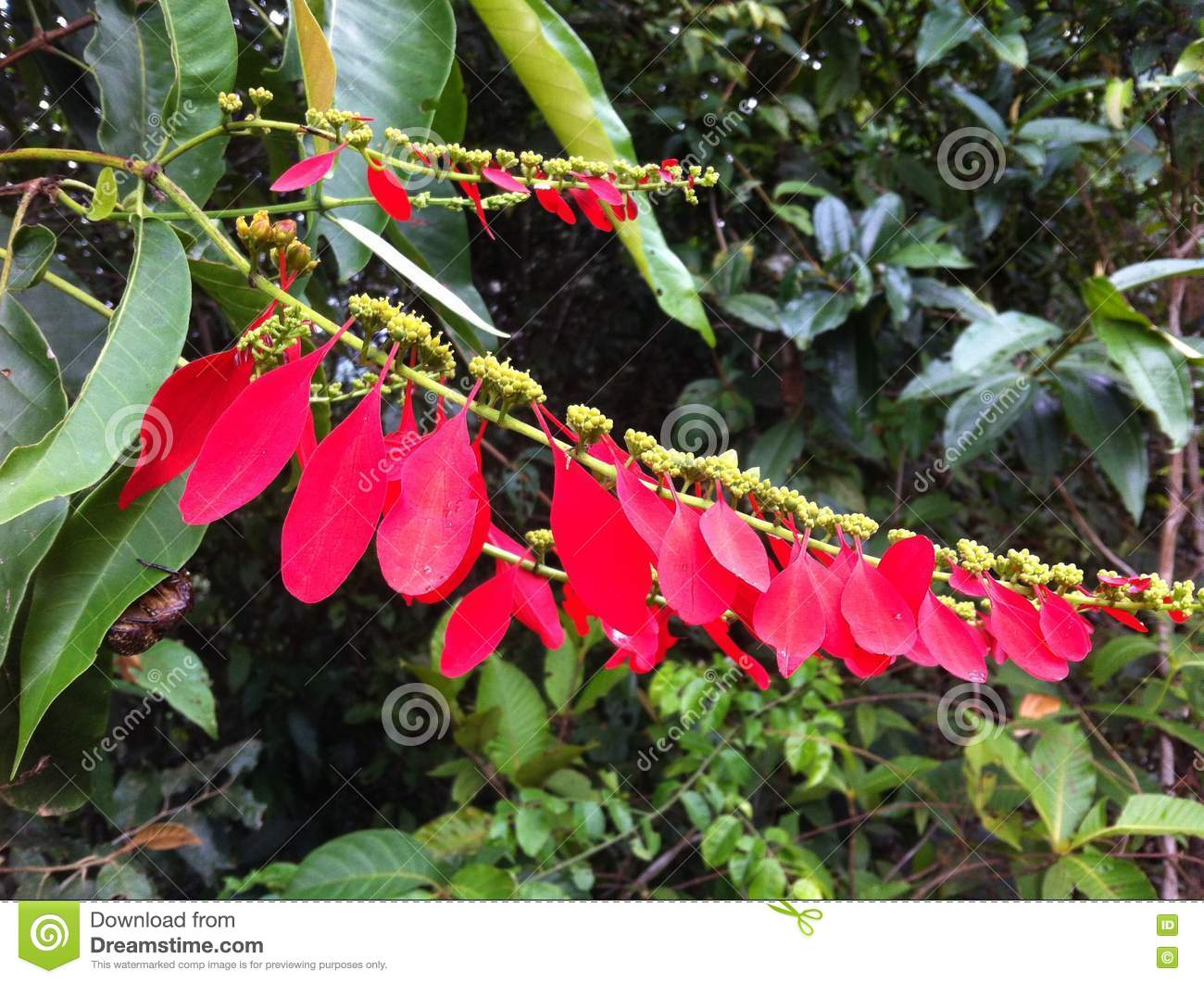 flower in the rainforest of peru stock image image of shiny