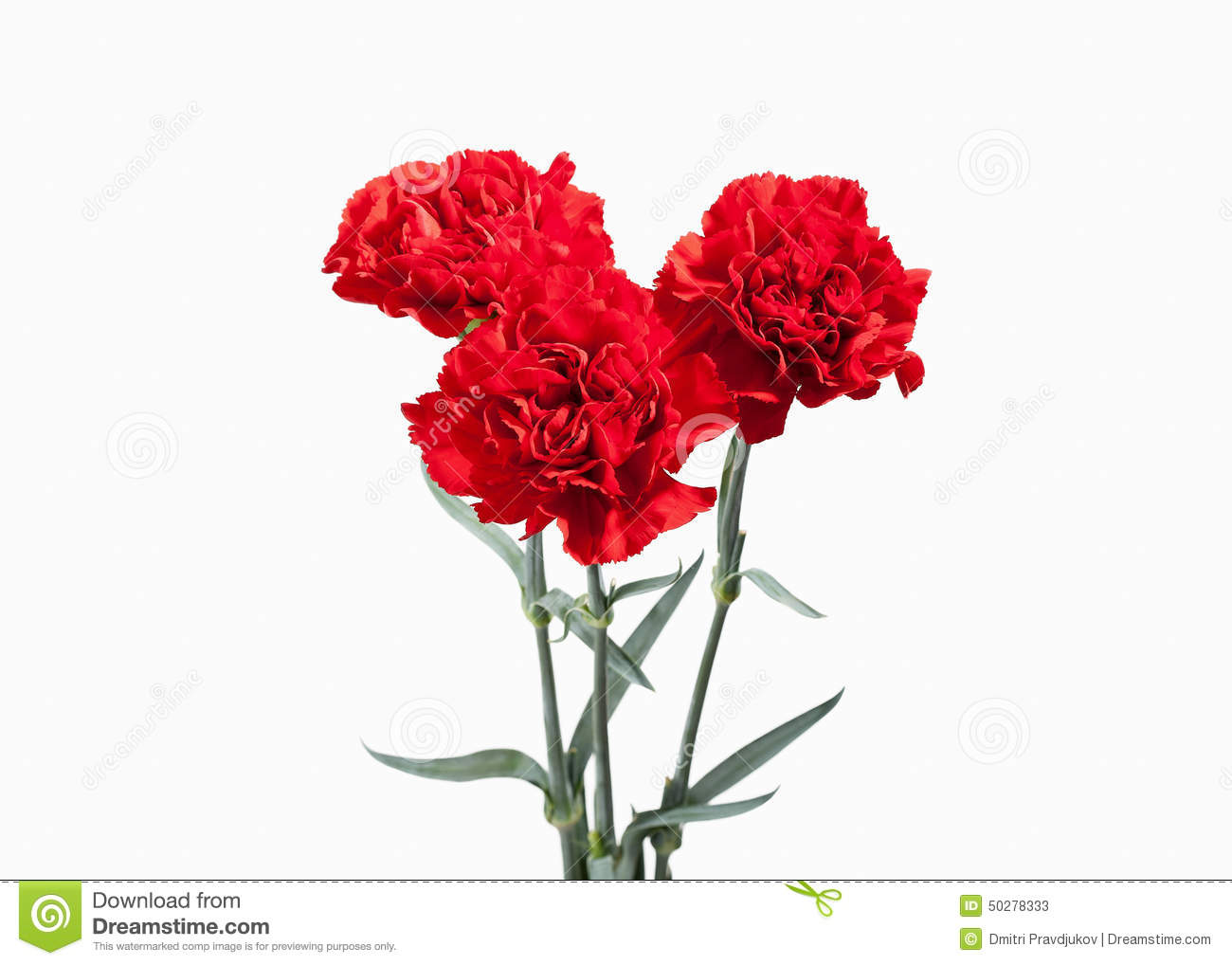 red carnations bouquet stock image image of romance white 4797543