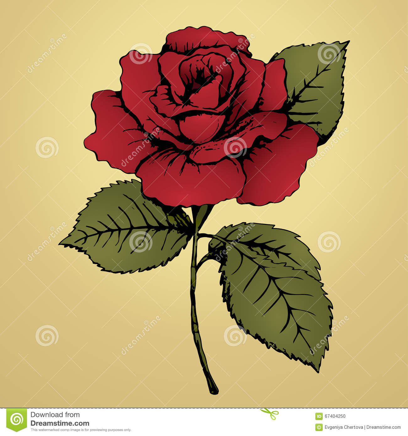 Flower Red Rose Hand Drawing Bud Red Petals Green Leaves