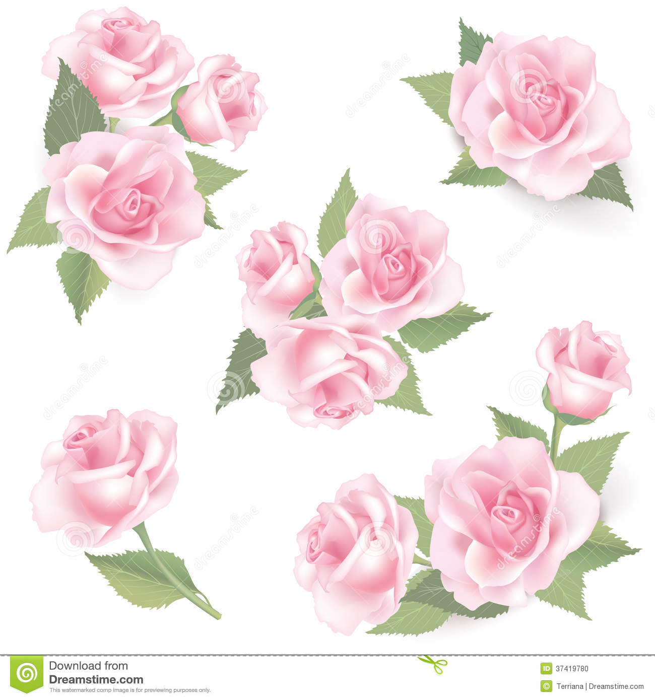 Flower rose set on white background floral decor stock for Cadre floral mural