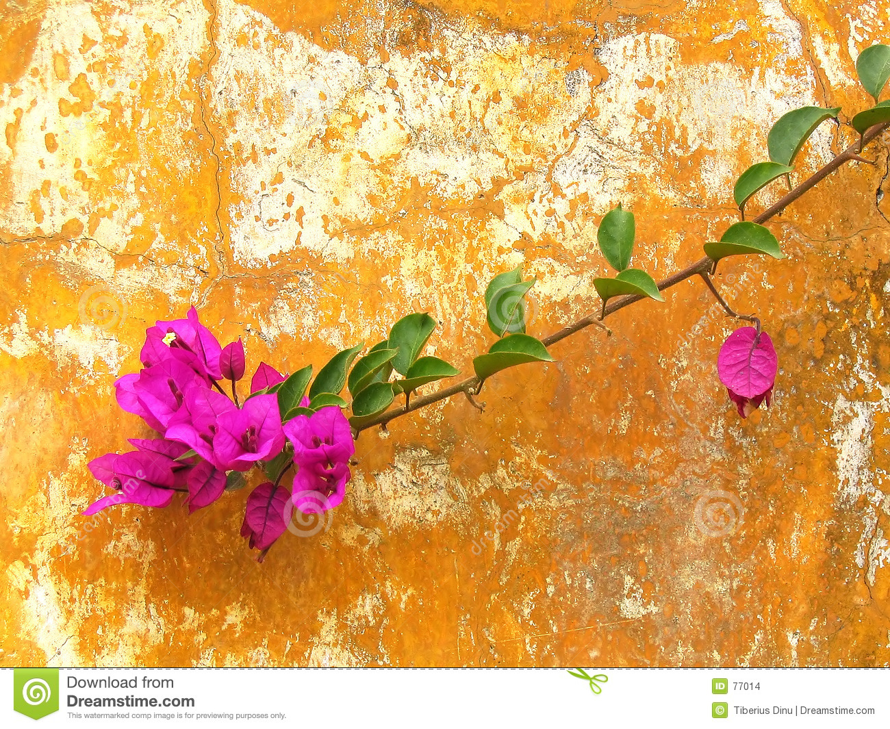 Flower on a rusty wall