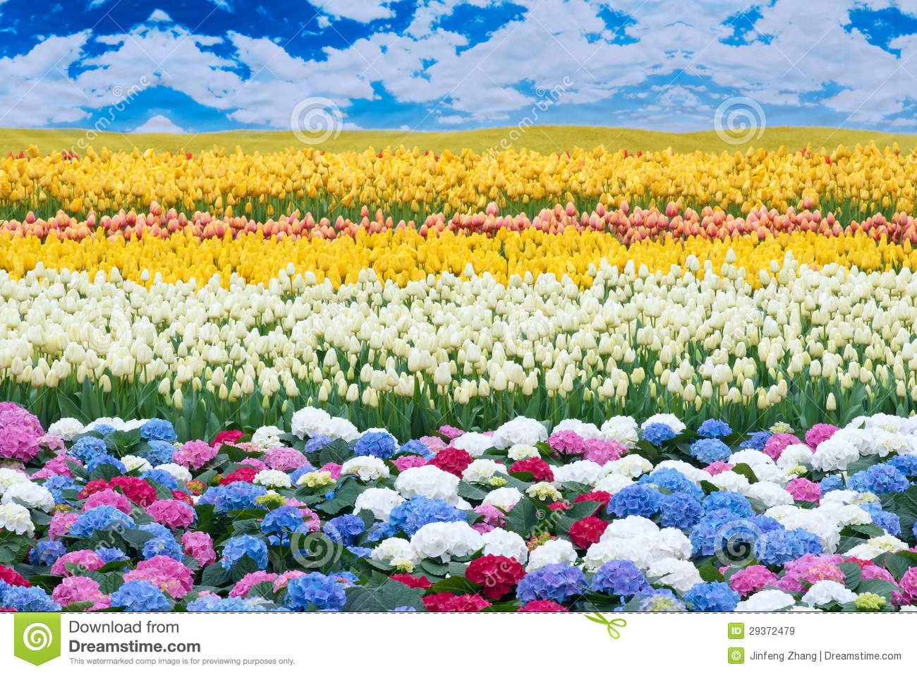 flower scenery stock image image of colour fowers white 29372479