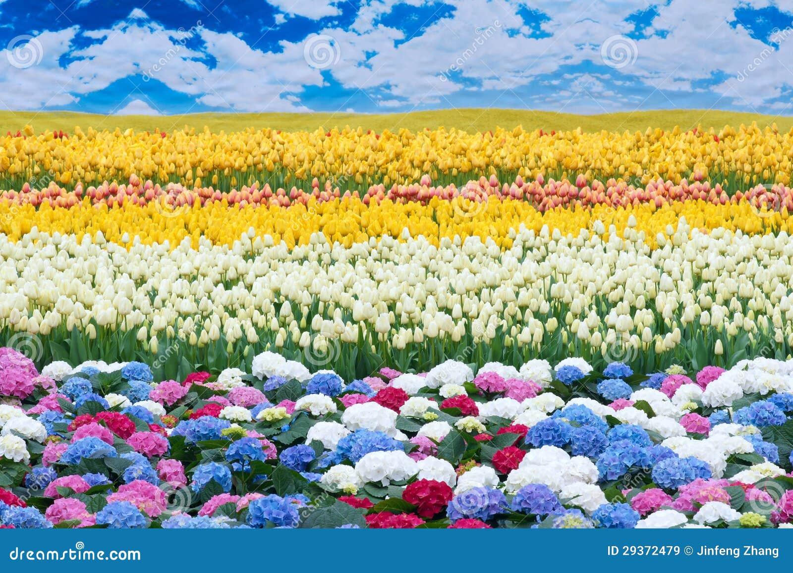 Flower scenery royalty free stock images image 29372479 - Flower Scenery Flower