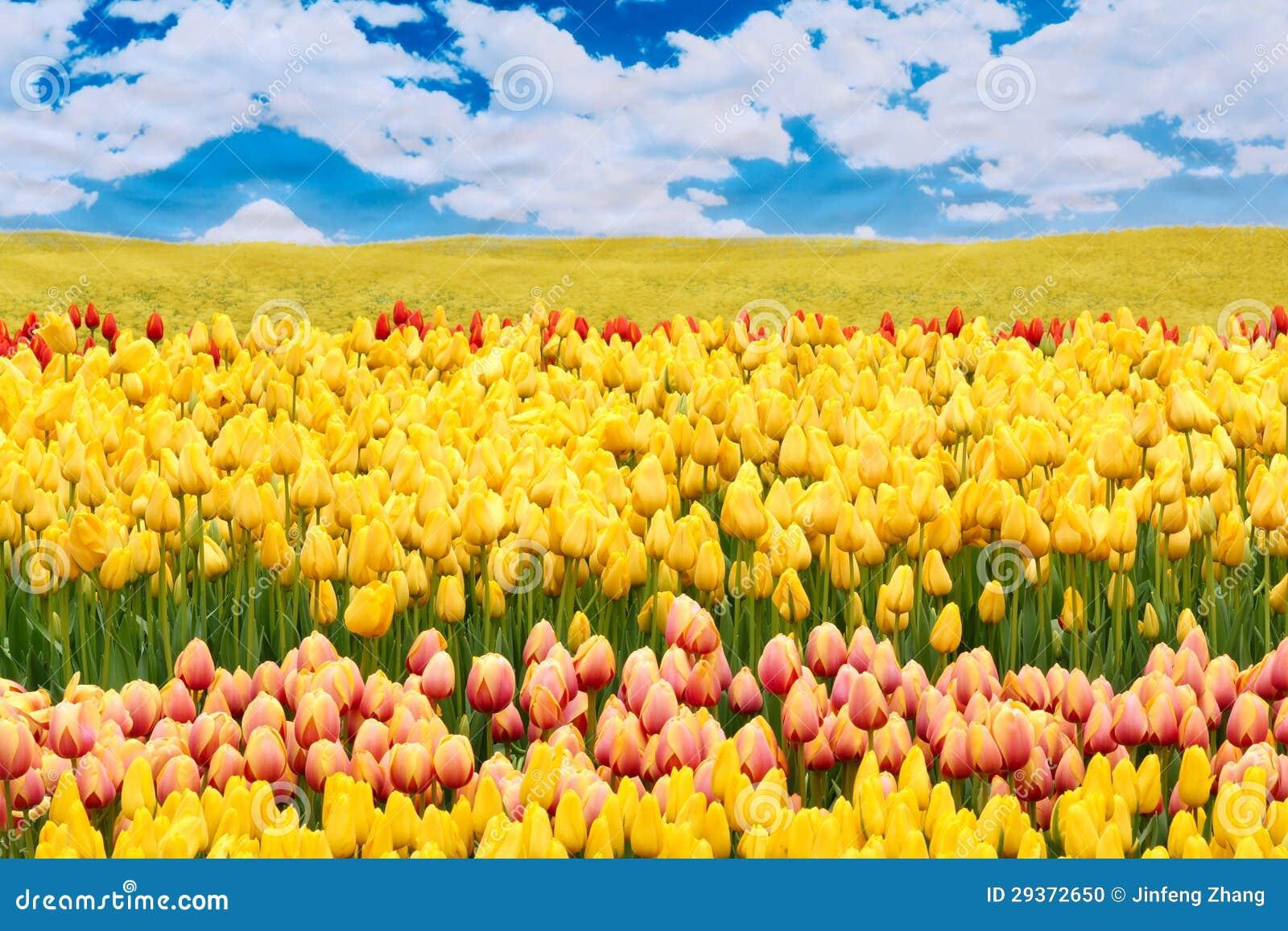 flower scenery stock photo image of cloud white yellow 29372650