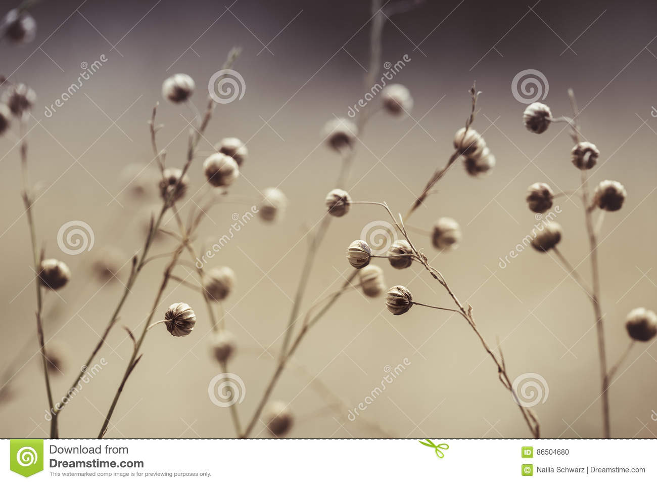 Flower Seed Pods in Summer