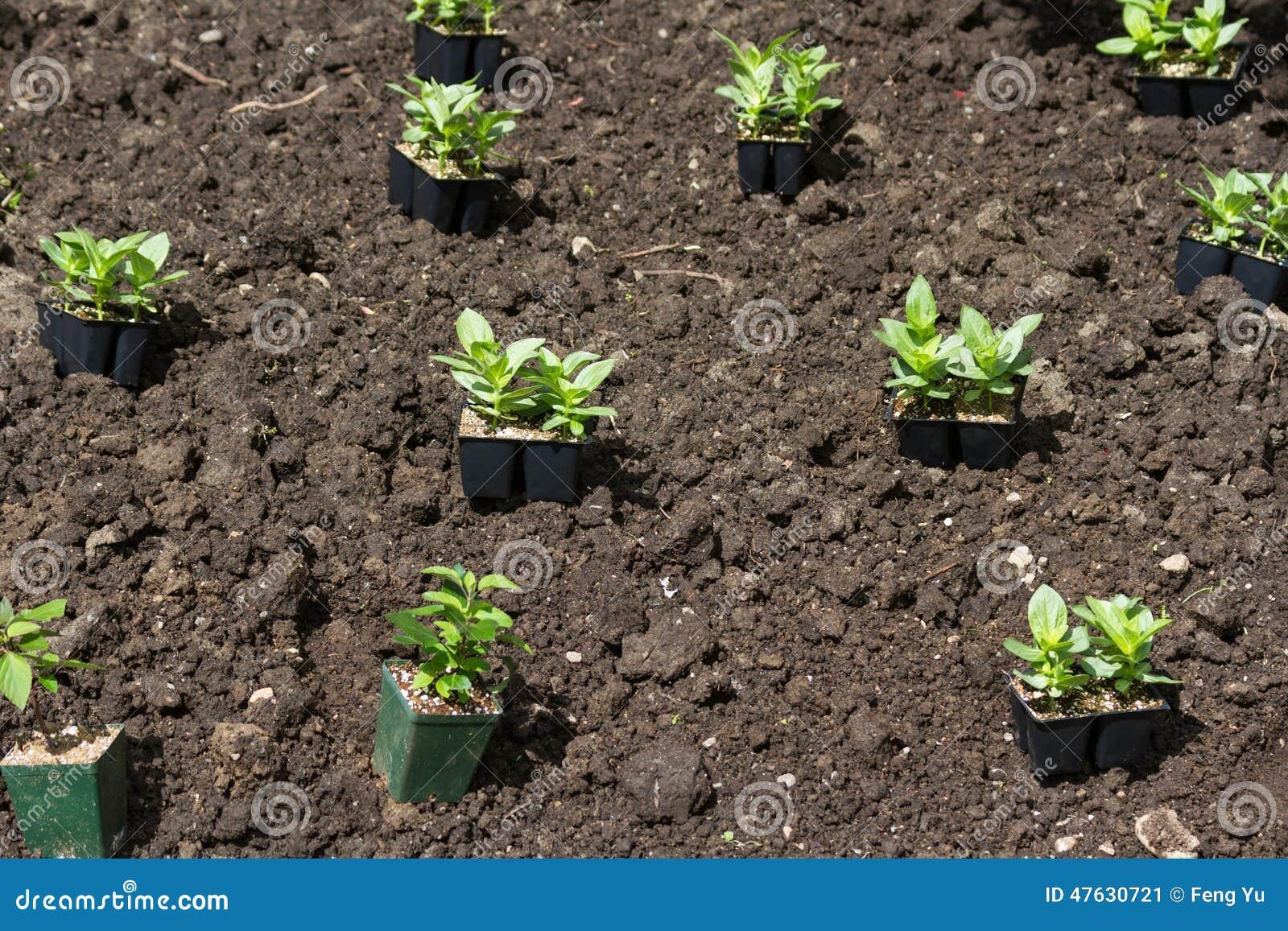 Как и когда сажать цветы на рассаду, чтобы украсить свой сад 60