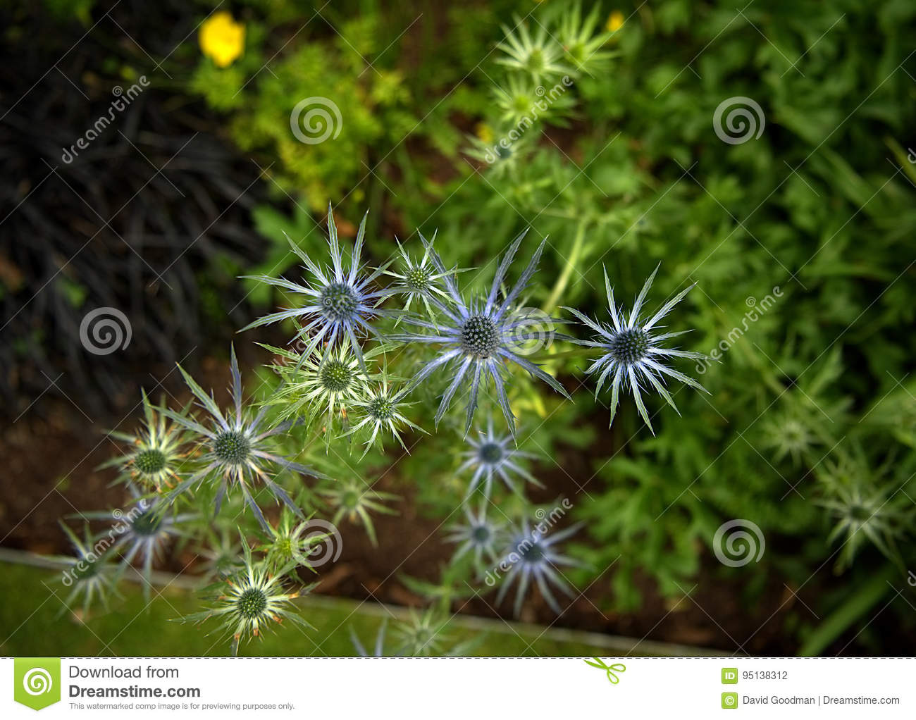 Flower Shaped Like A Star Stock Photo Image Of Plant 95138312