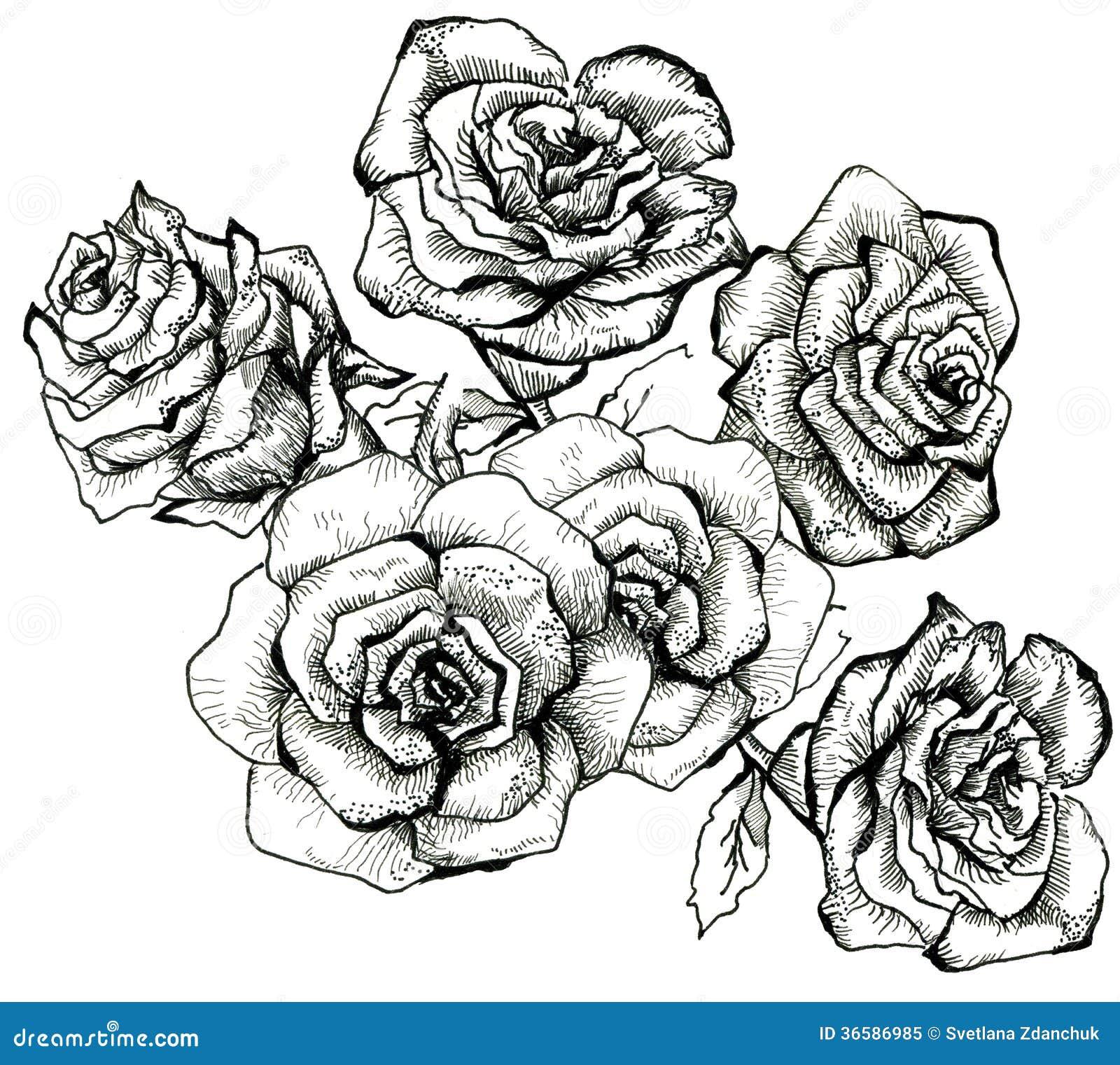 Flower Bouquet Line Drawing : Flower sketch bouquet stock illustration image of