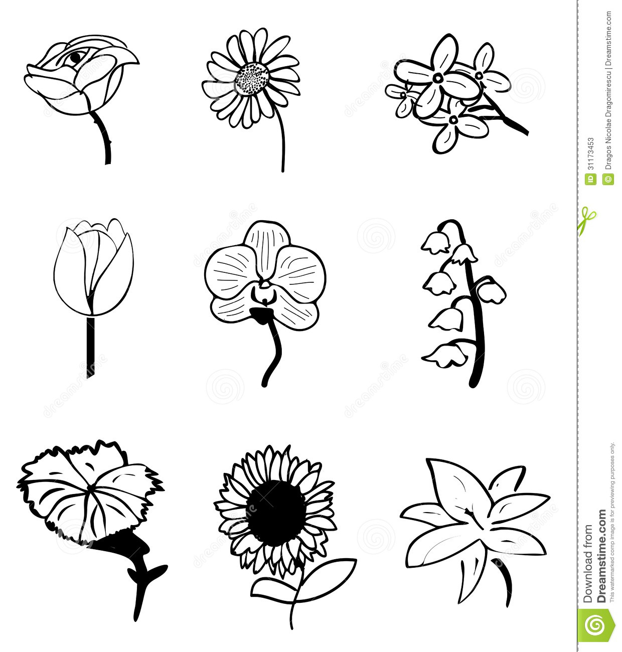 flower sketches stock vector illustration of carnation 31173453