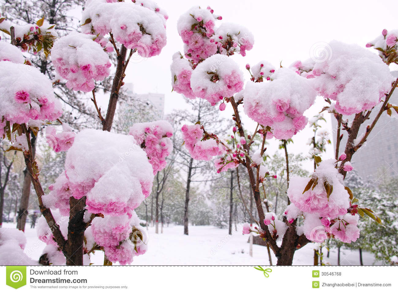 Flower and snow stock photo. Image of cold, frigid, bloom