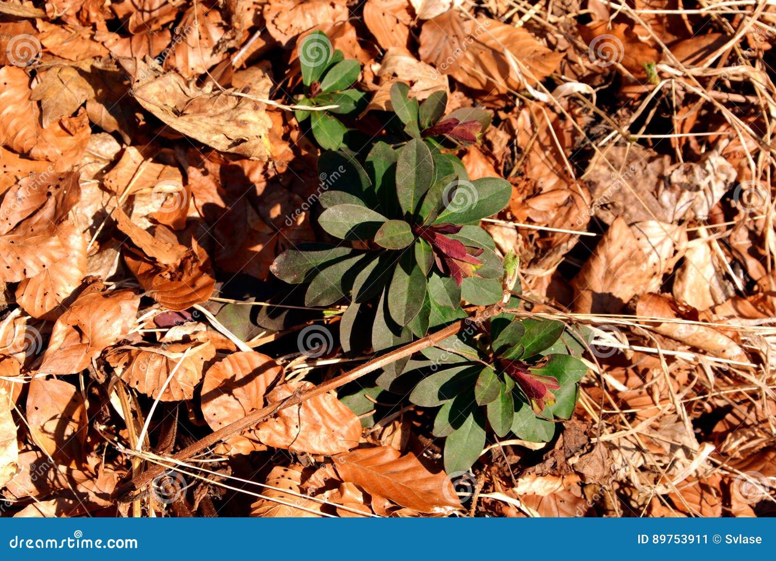 Square Roots Stock Symbol Papel Pintado Vector Circuit Tree Photo Image 34279490