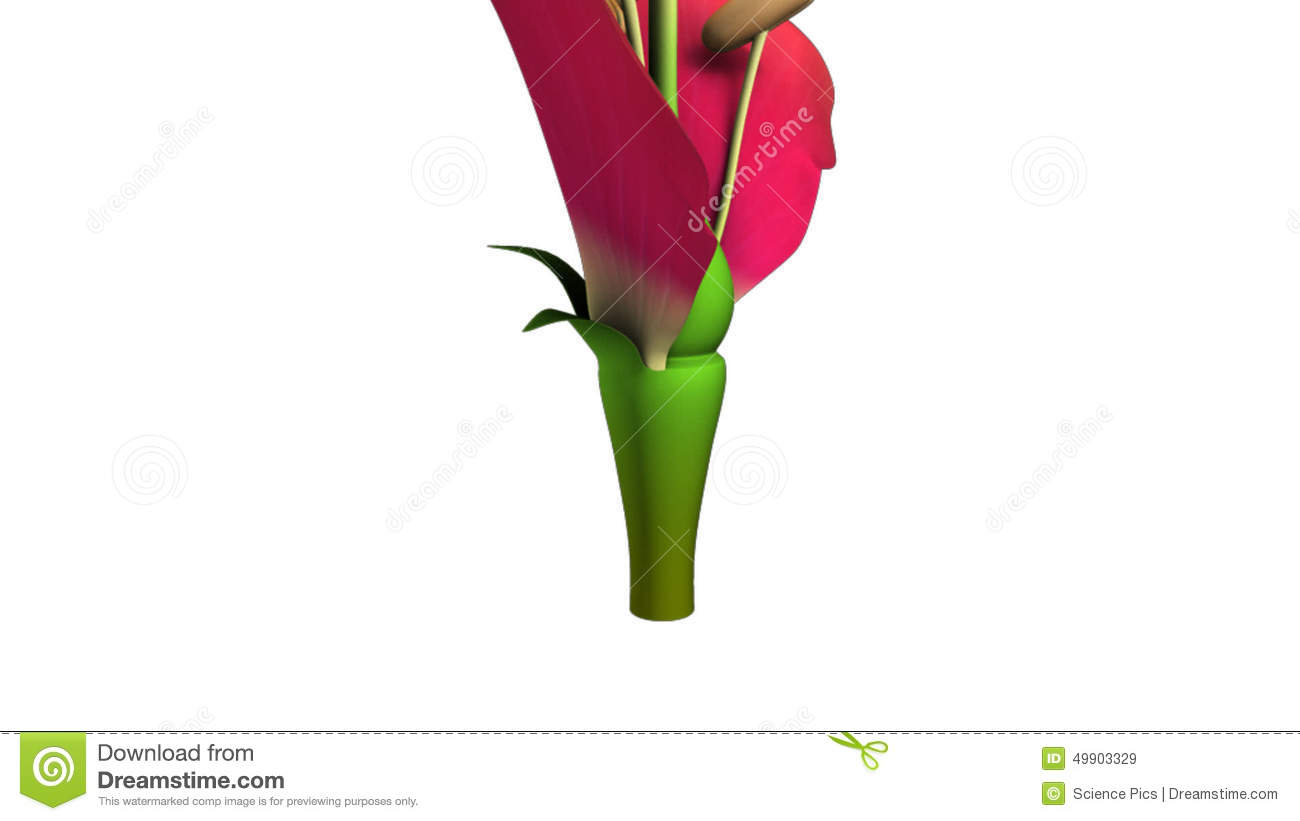 Flower Structure Stock Video Illustration Of Ovary Pattern 49903329