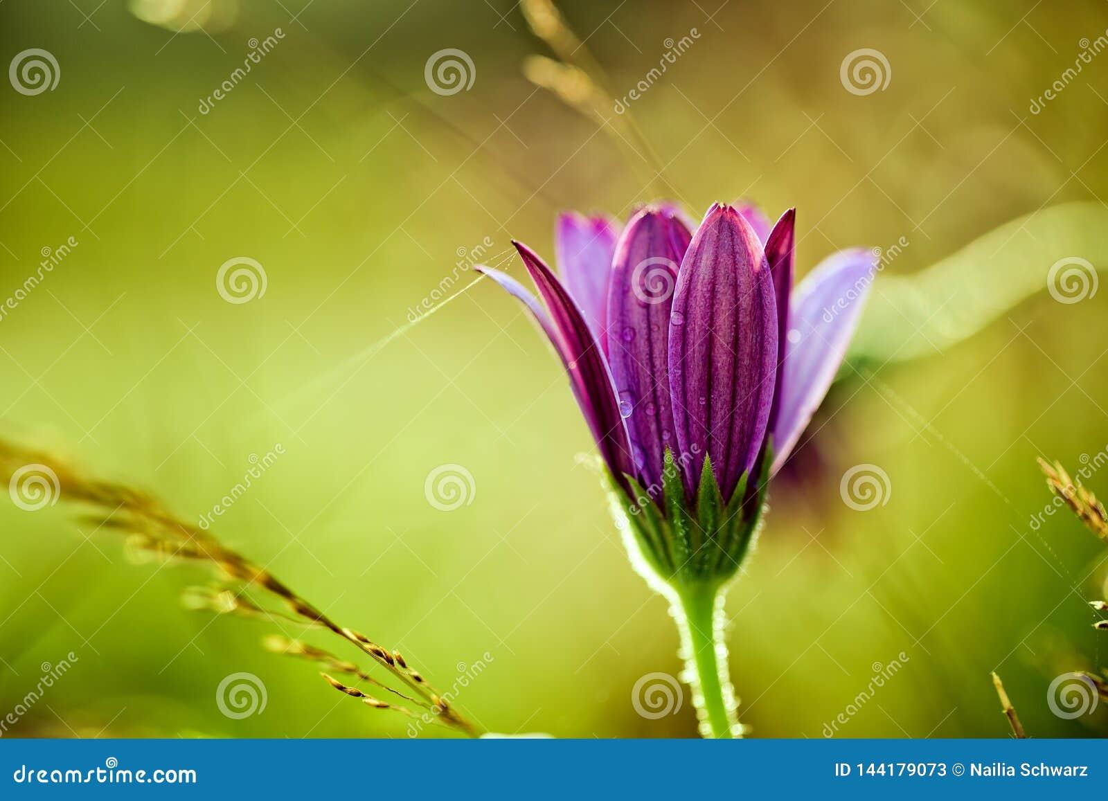 Flower on Summer Meadow