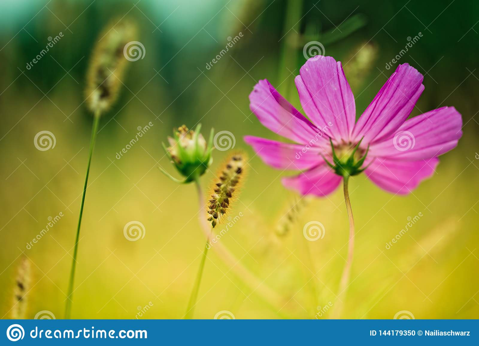 Flower on Summer Meadow