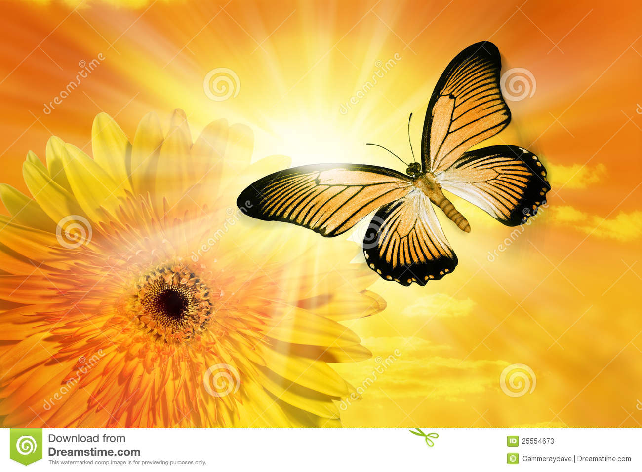 Flower sun sky butterfly stock photos image 25554673 - Doek voor de zon ...