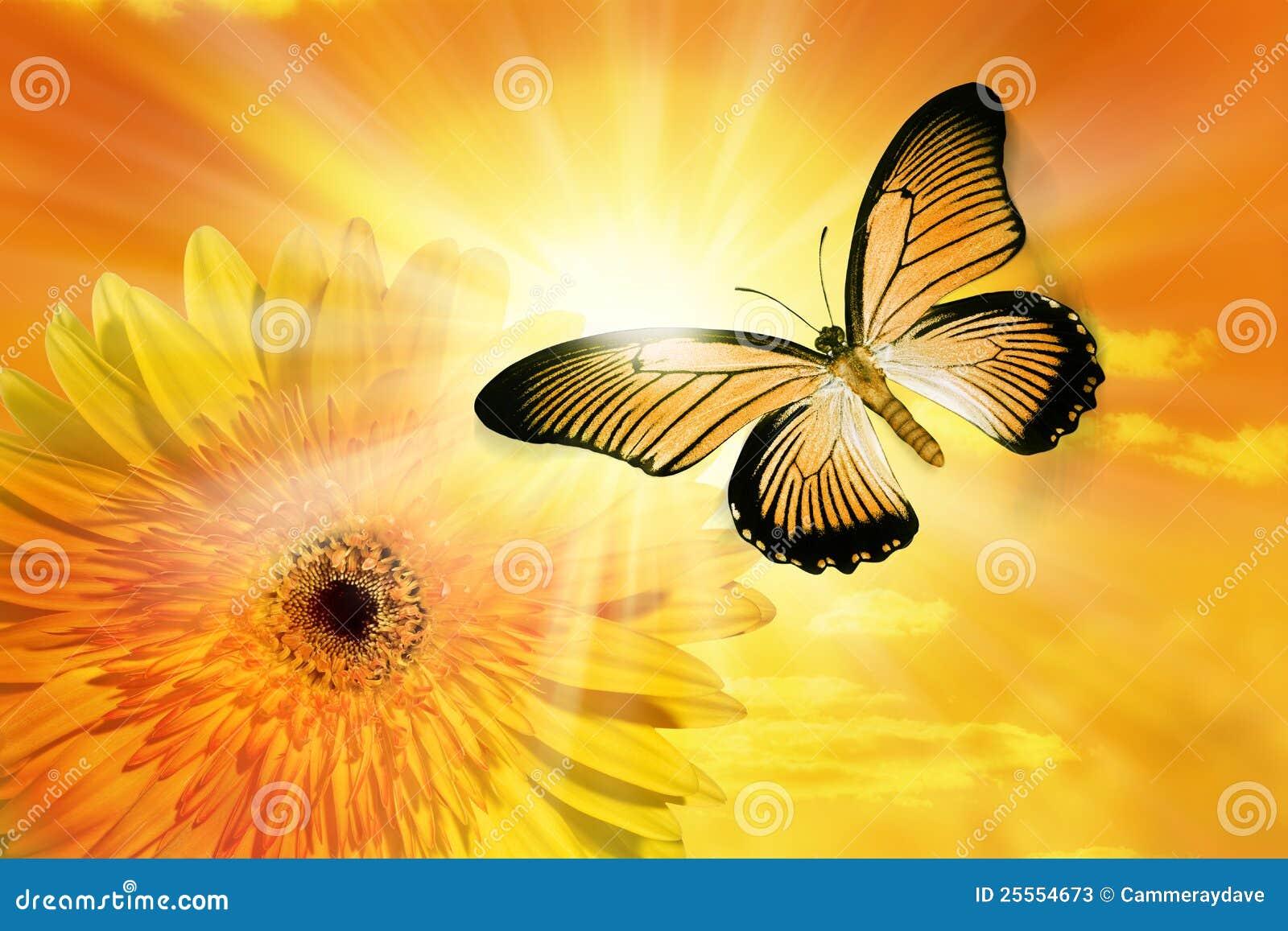 Flower Sun Sky Butterfly