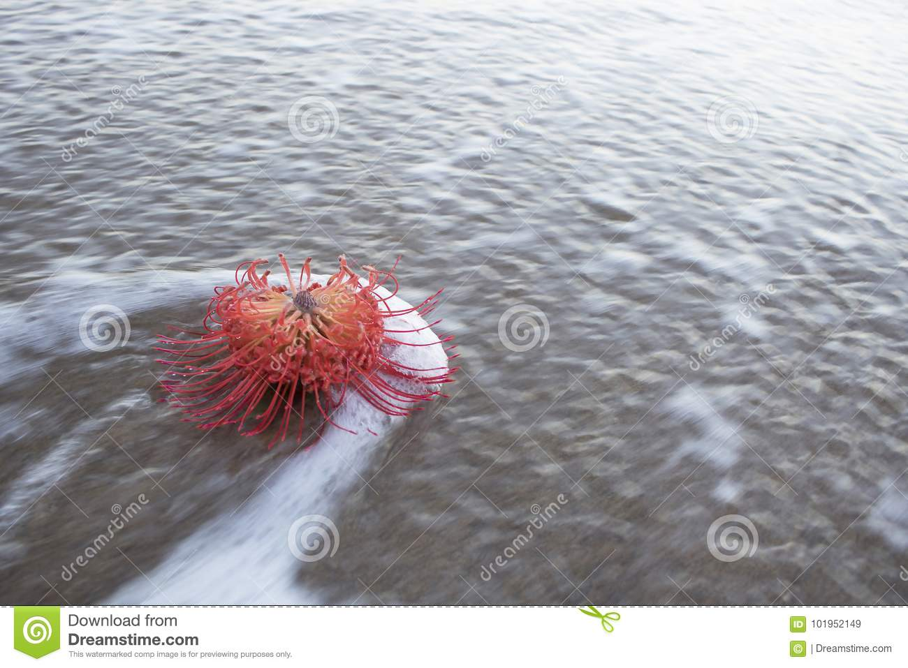 Flower Swamped By Wave With Foam And Lines Stock Image Image Of