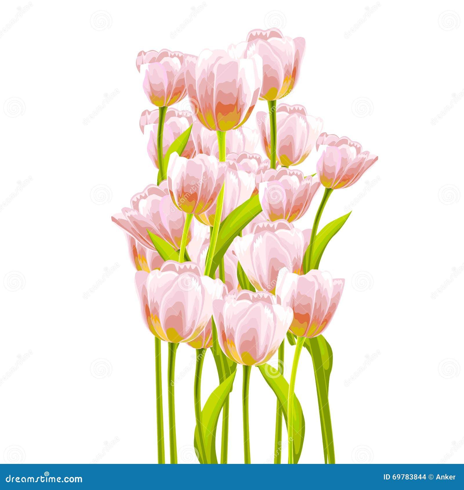 Flower Tulip Background. Stock Vector. Illustration Of