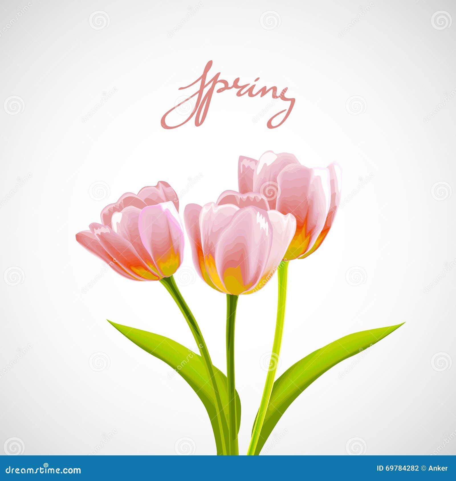 Flower Tulip Background. Stock Vector. Image Of Love