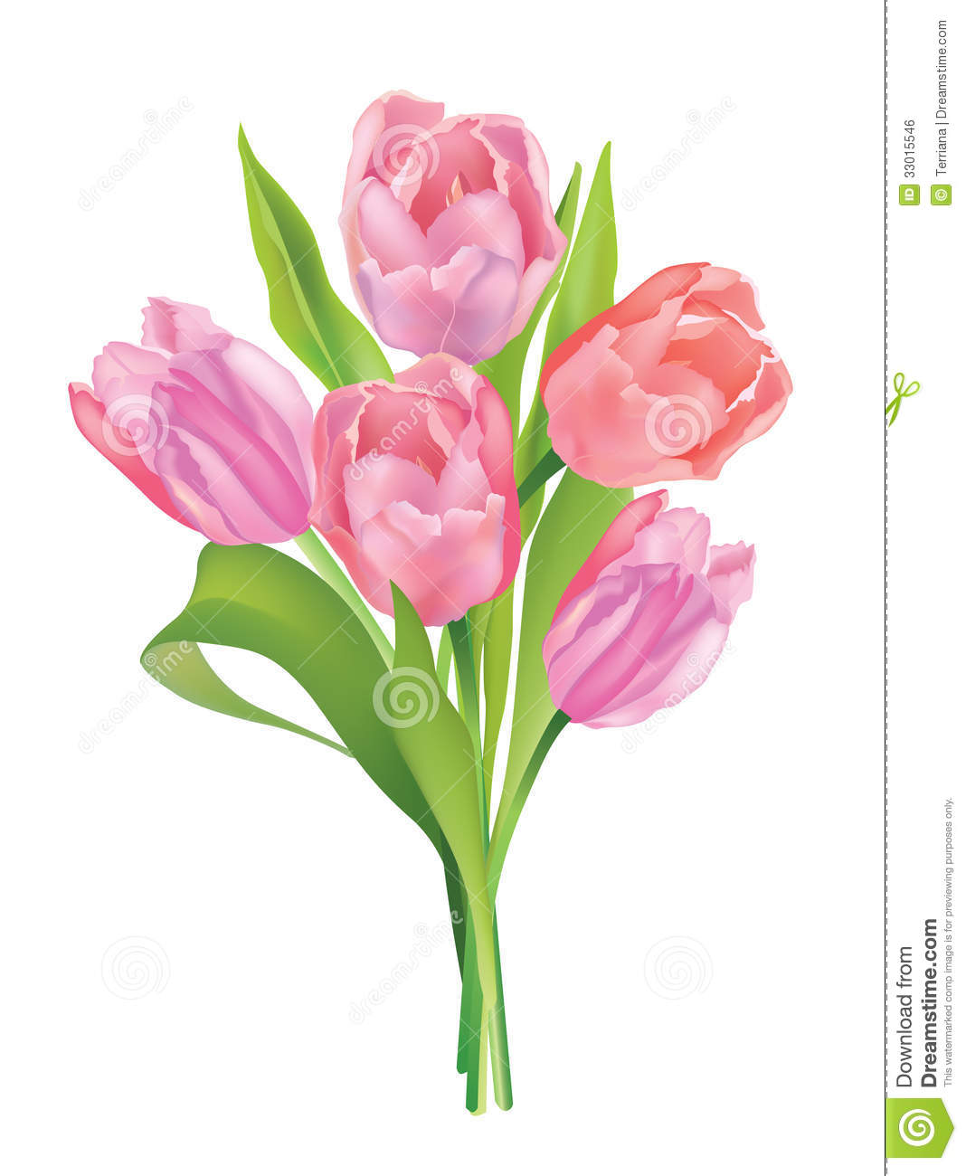 Flower Tulip Bouquet Isolated On White Background Stock