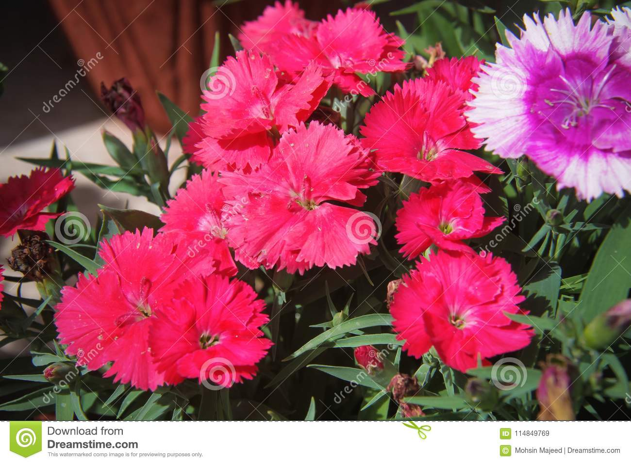 Flowers for background beautiful stock image image of bloom download flowers for background beautiful stock image image of bloom beautiful 114849769 izmirmasajfo