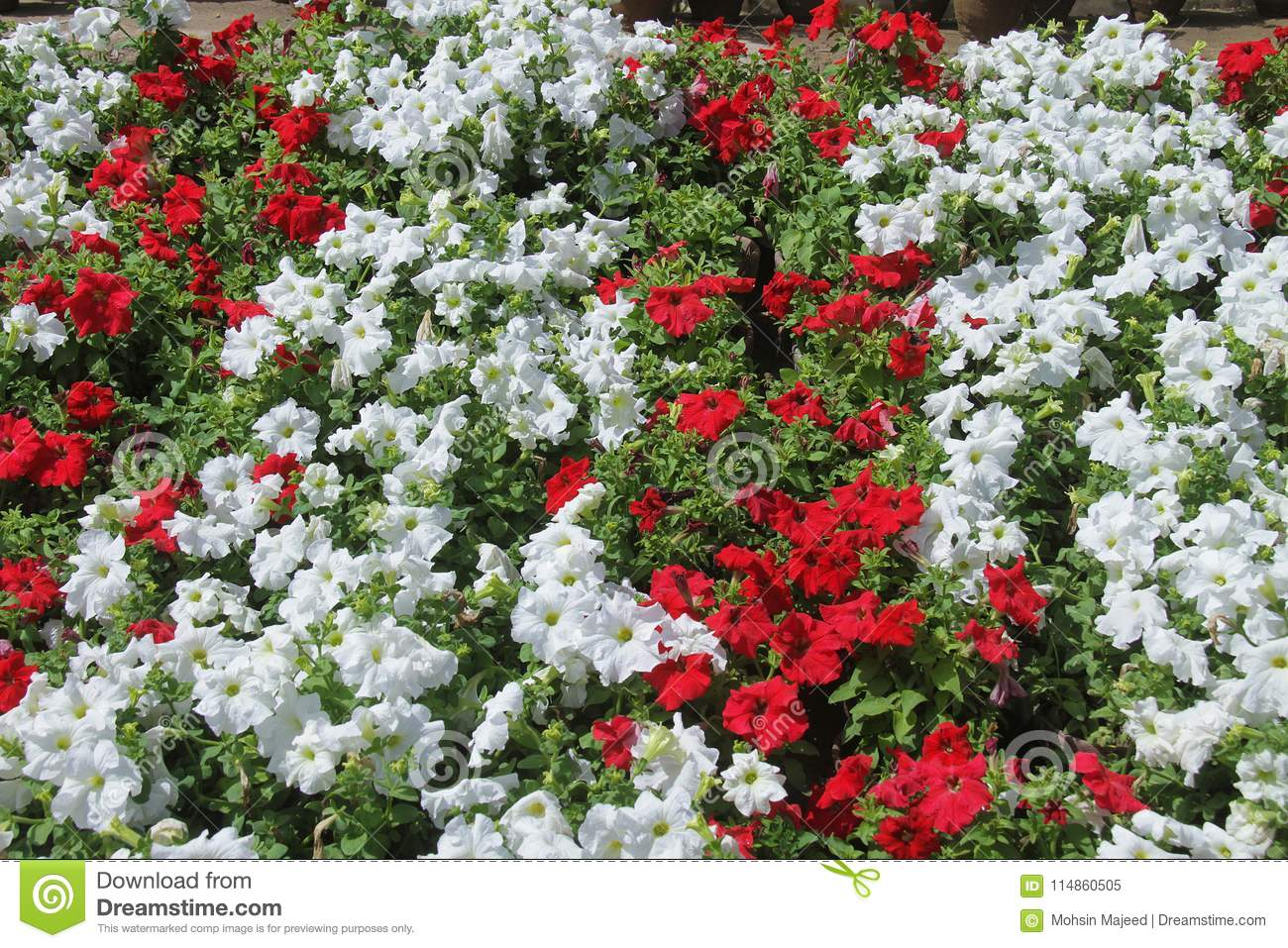 Flowers for background beautiful stock image image of glitter flower up close with blurred garden background beautiful spring flowers expensive flowers izmirmasajfo